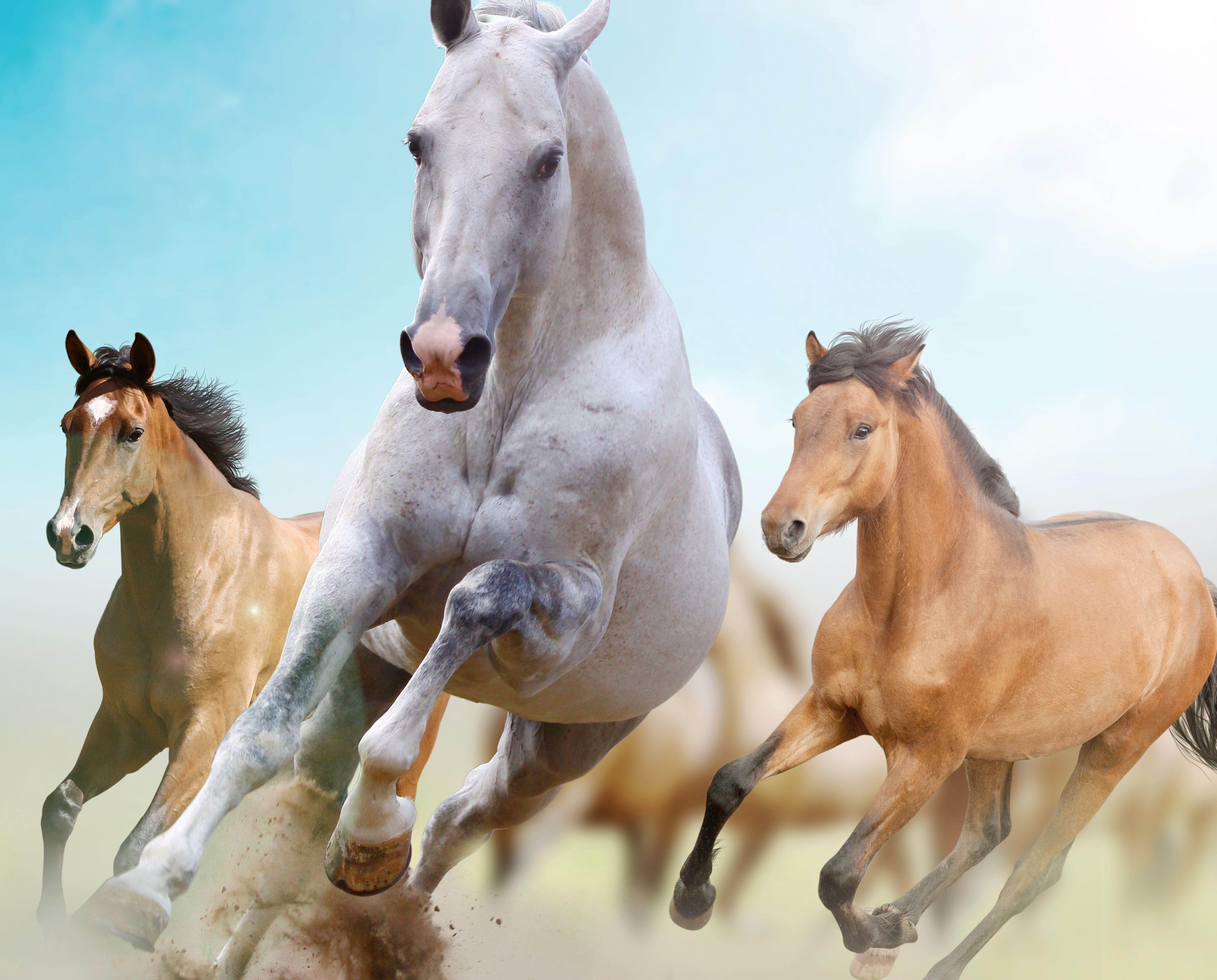 7 running horse wallpaper desktop background: Running Horses Wallpapers