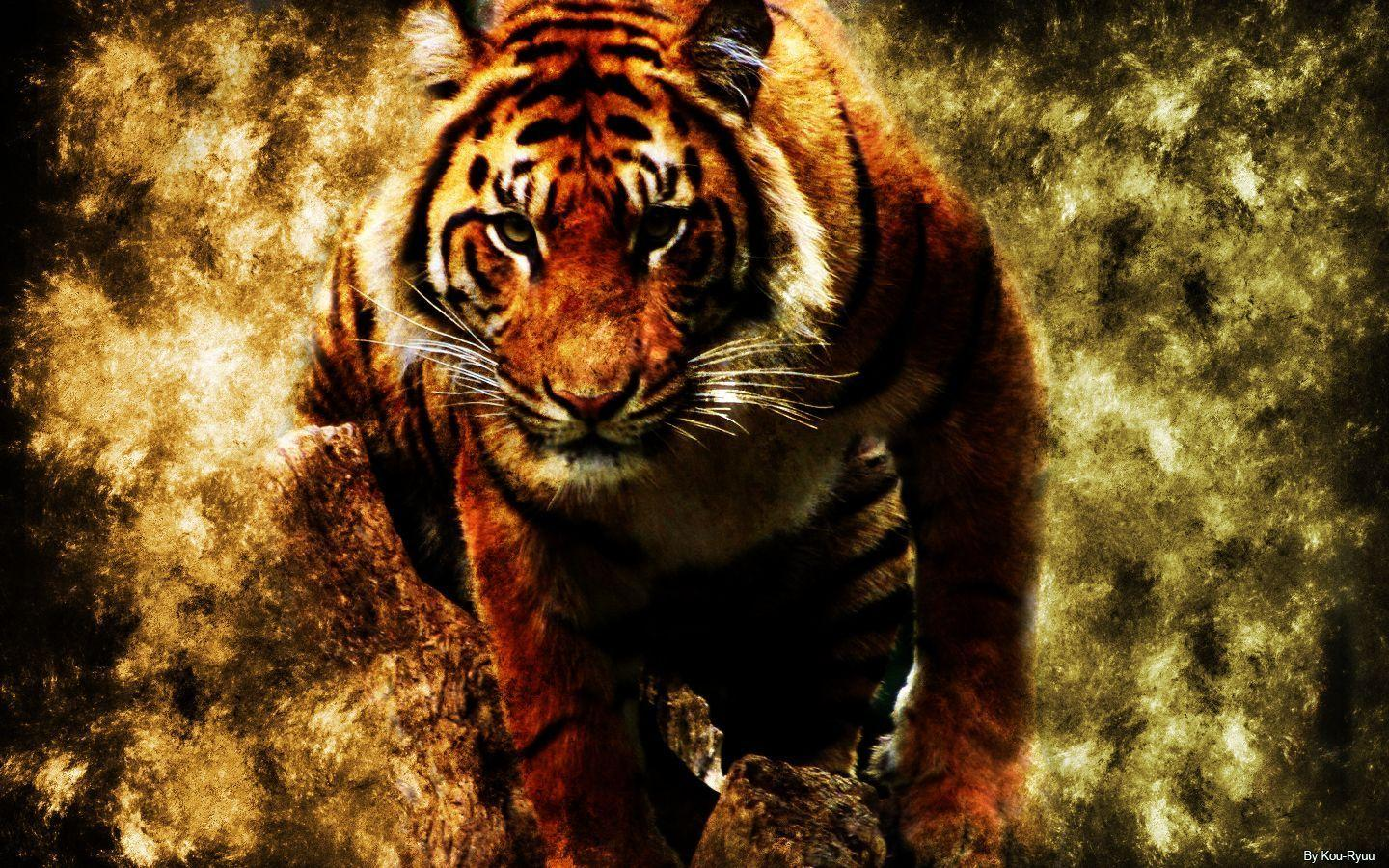 Eye Of The Tiger Wallpapers Wallpaper Cave