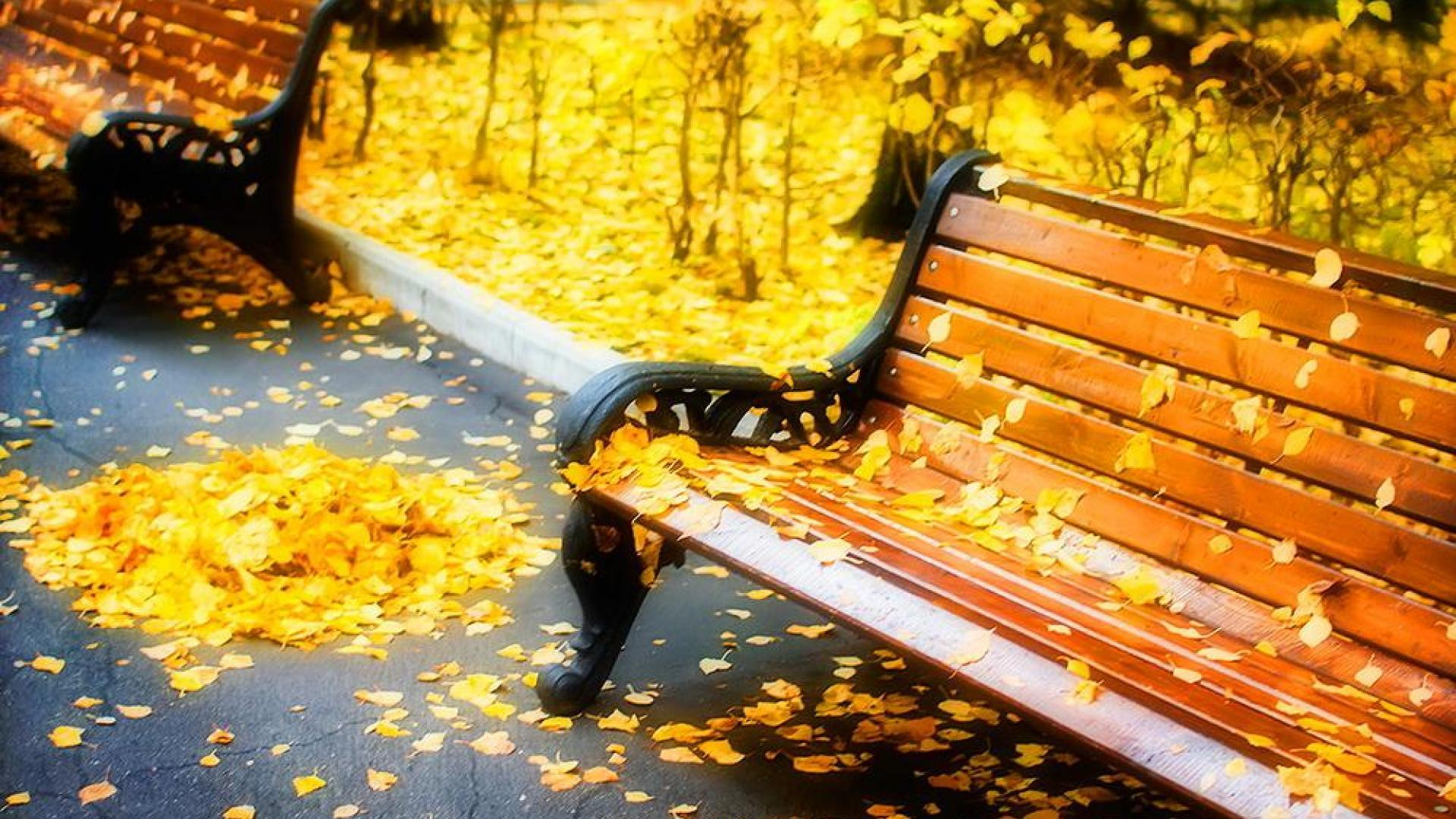 Cute Bench Wallpapers Wallpaper Cave