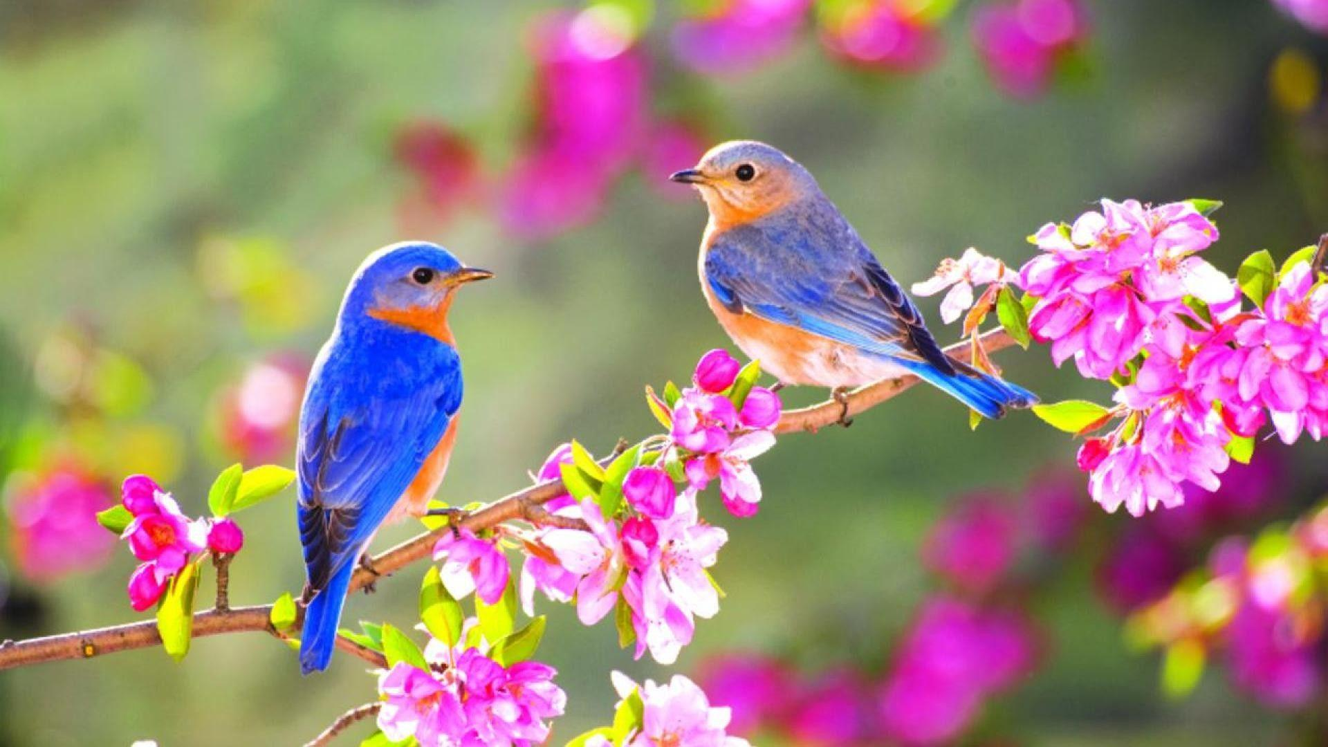 Bird Wallpapers For Desktop Wallpaper Cave