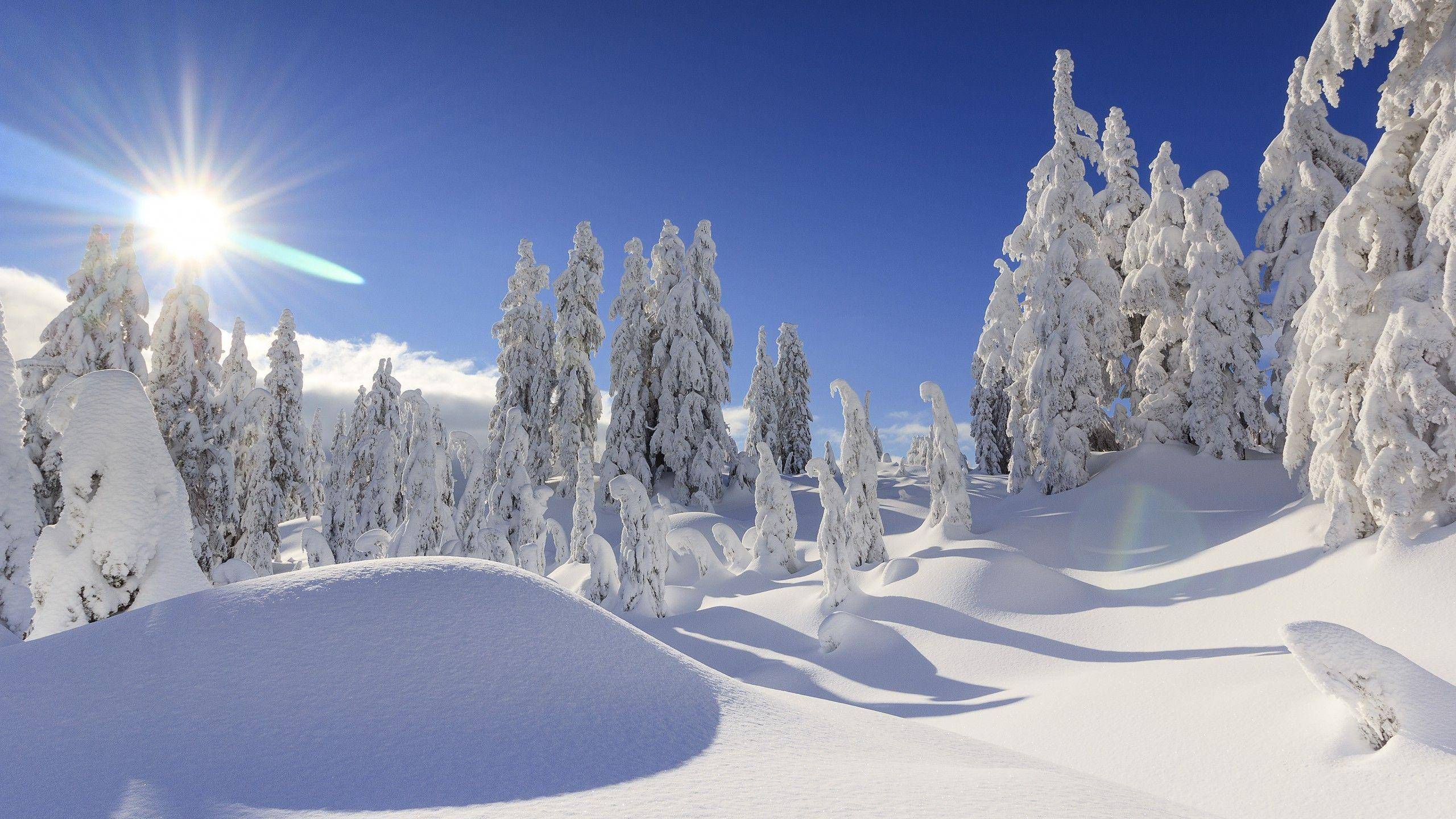 Winter Snowfall Wallpapers Wallpaper Cave