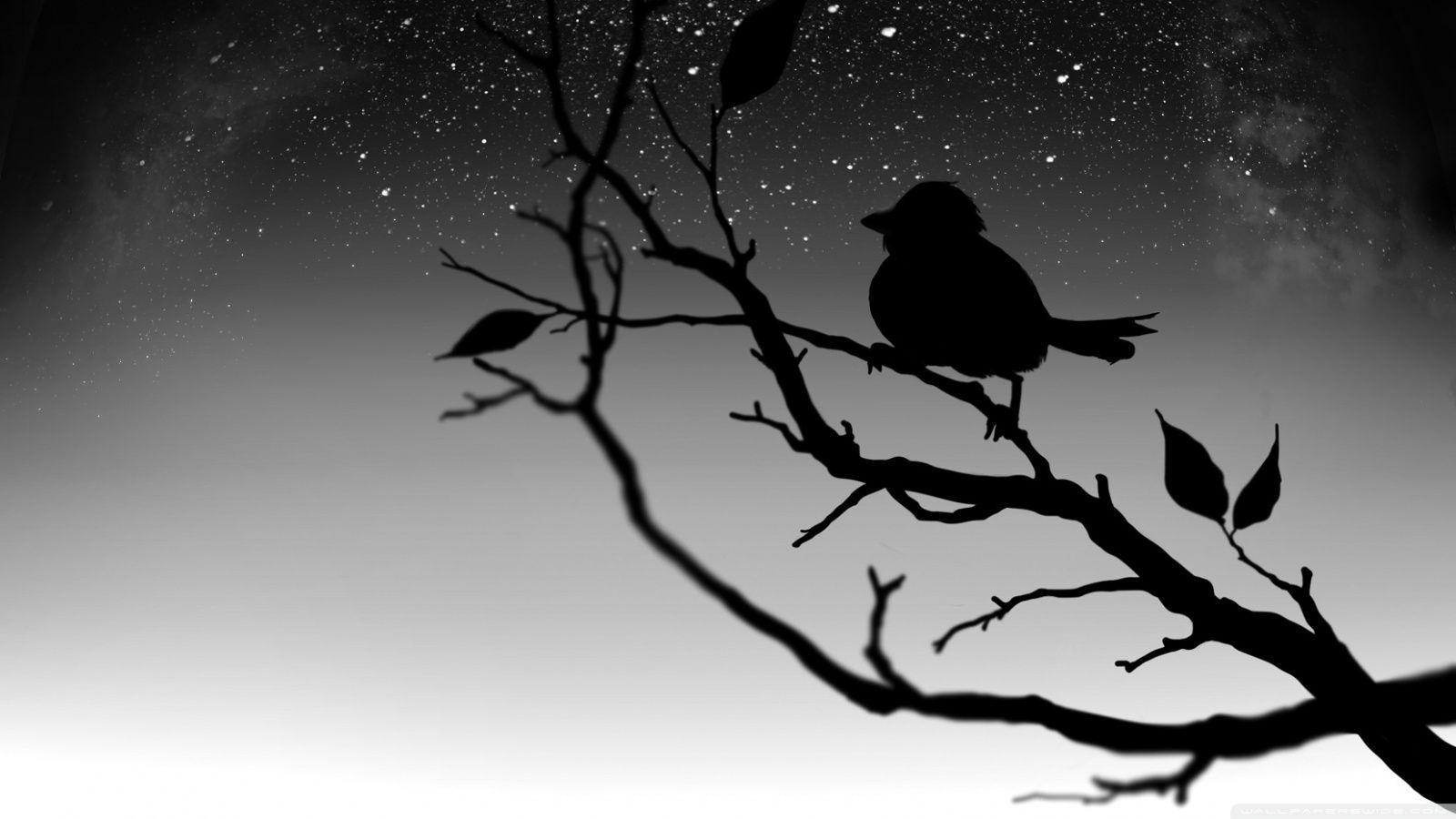 21529 Black Bird Wallpaper Hd