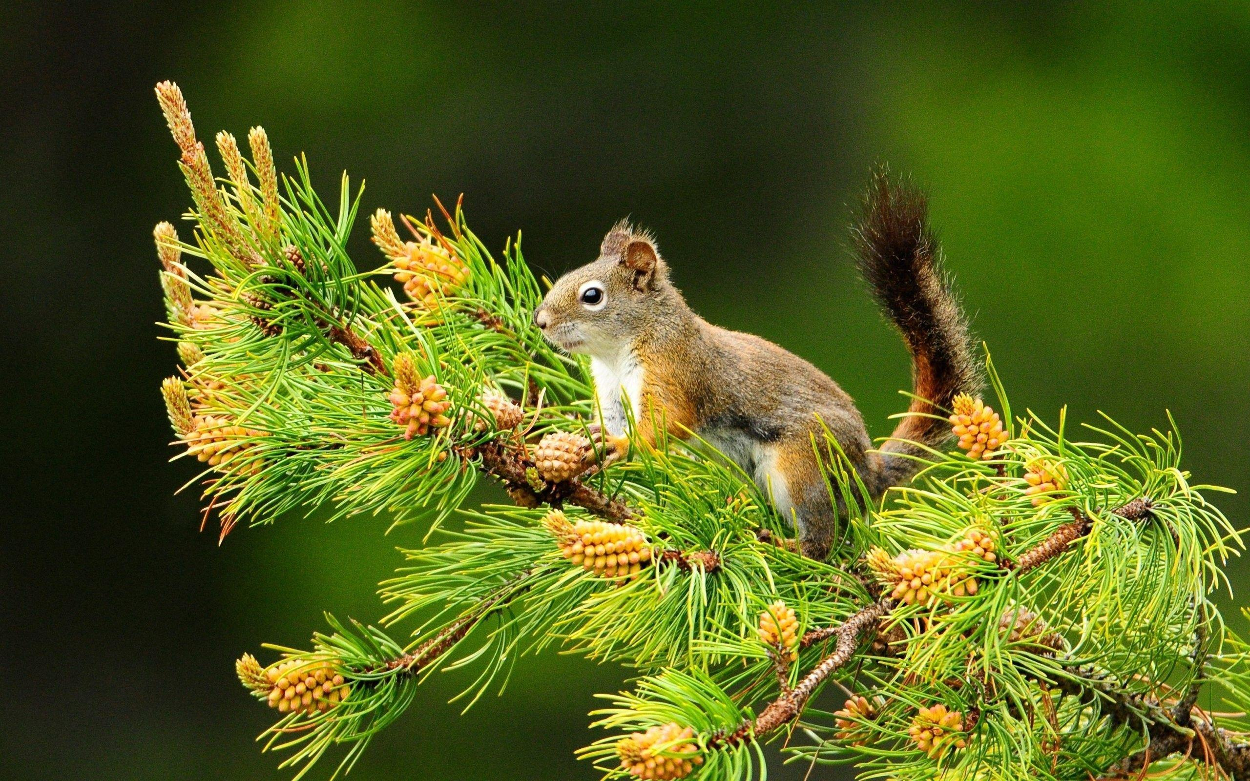 Natur Tiere
