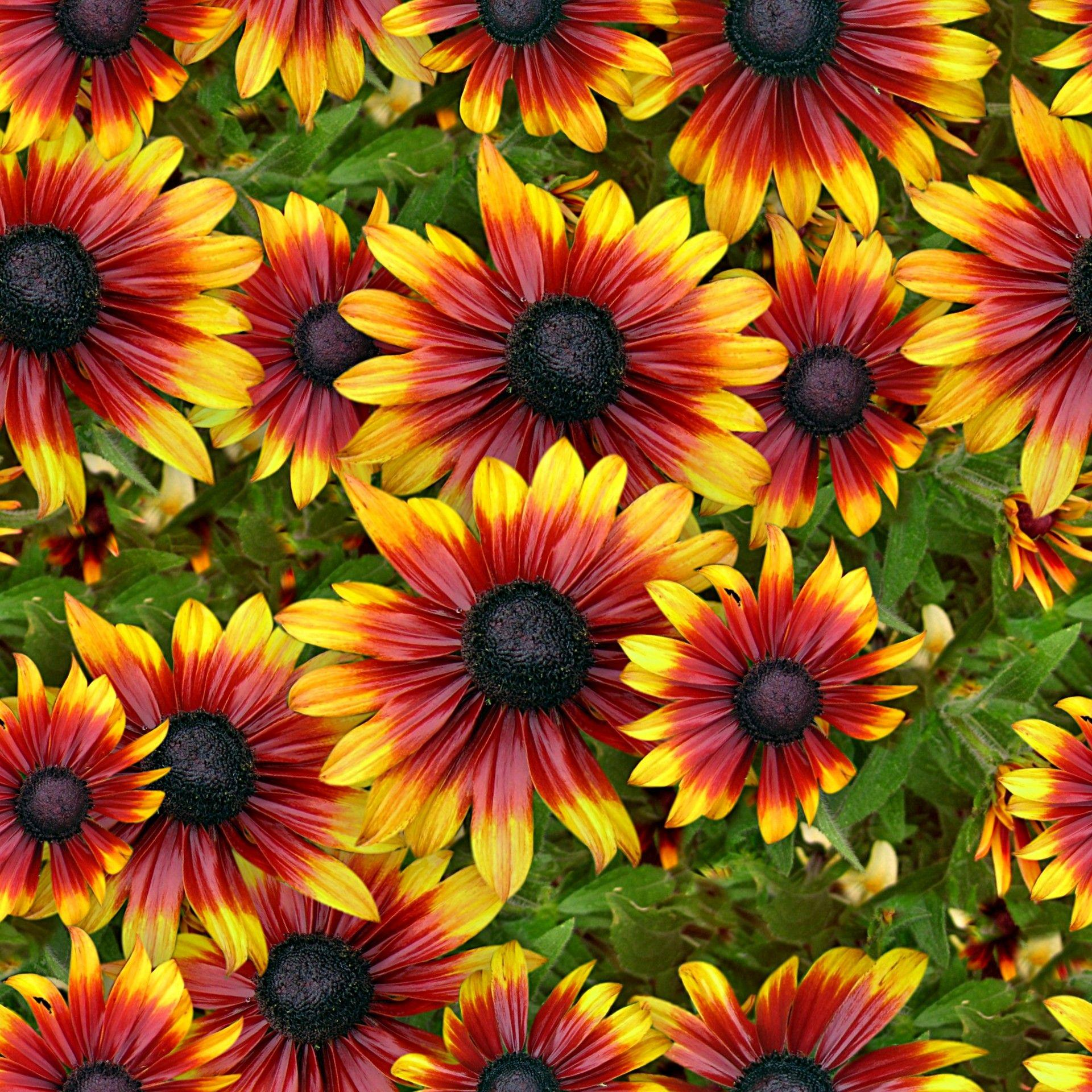 Beautiful Flower For Wallpaper: Beautiful Real Flowers Backgrounds