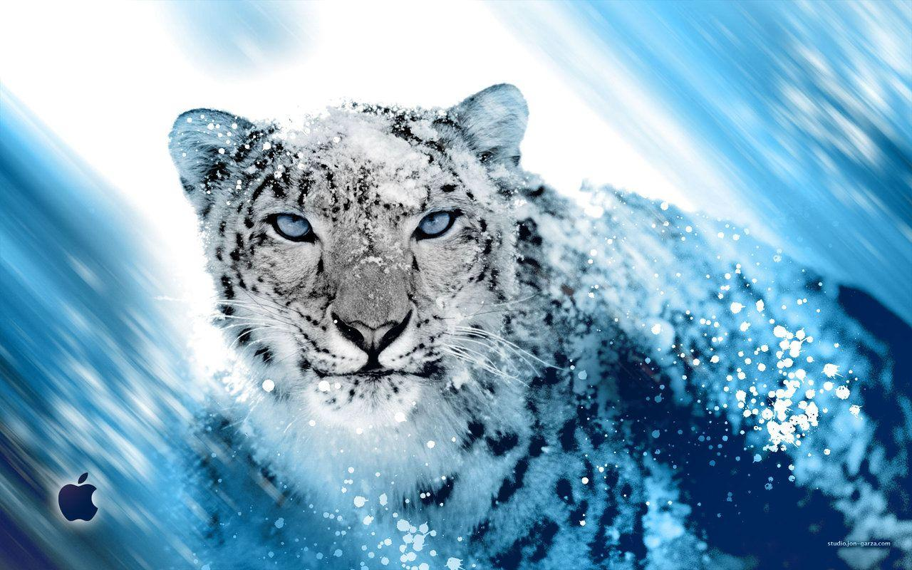 Snow Leopard Wallpapers 1280x800 Wallpaper Cave