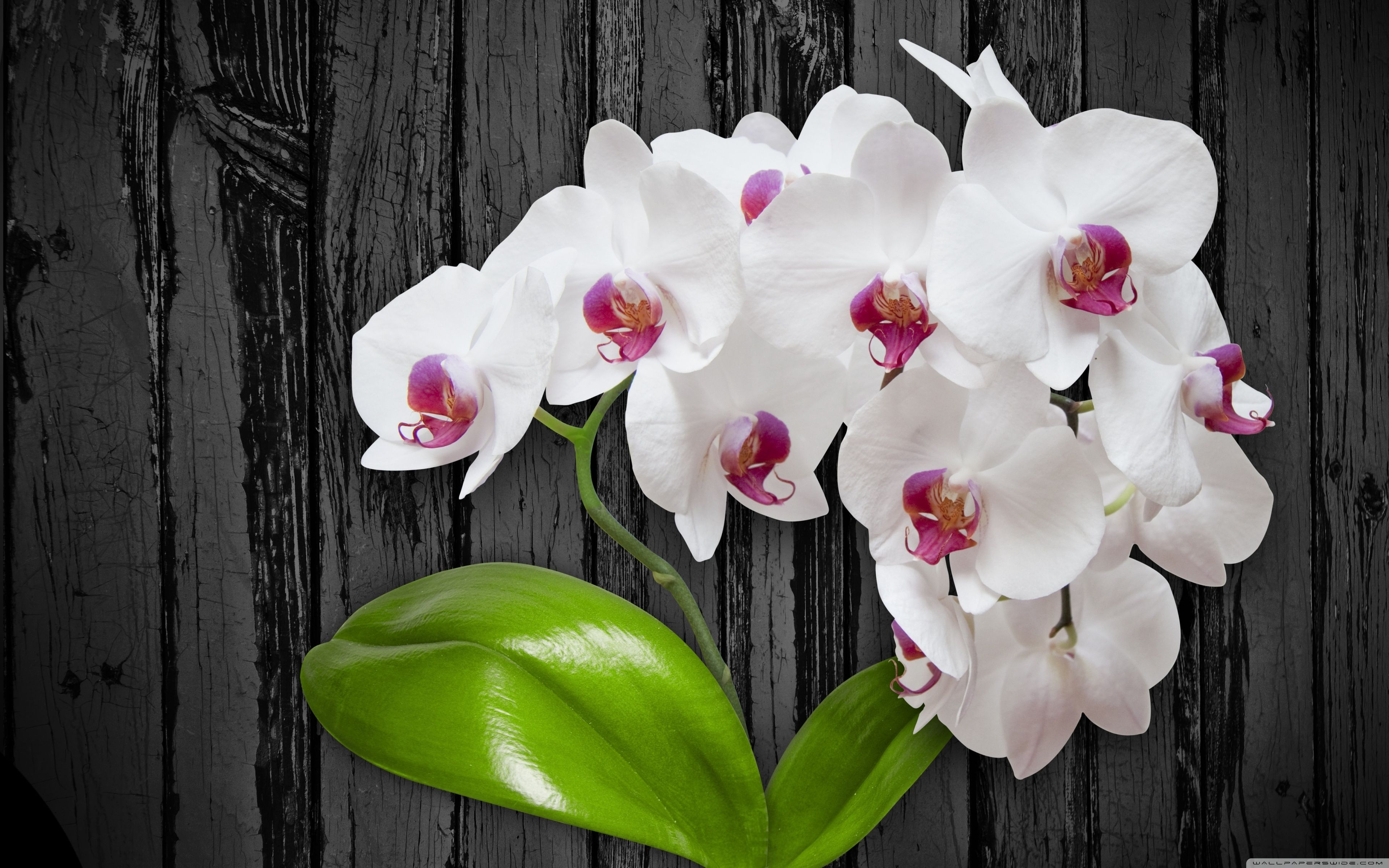 Orchid Flower 4k Wallpapers Wallpaper Cave