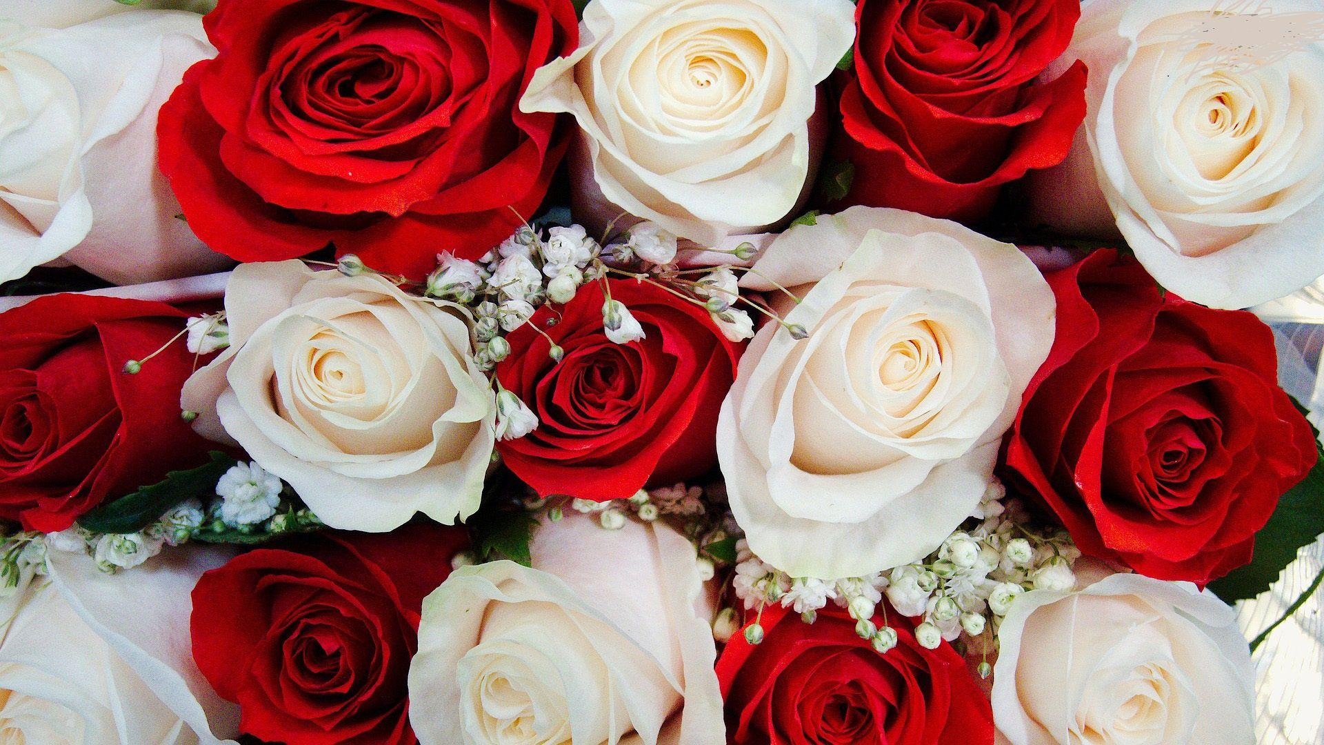 Wallpapers Of Red White Roses Wallpaper Cave