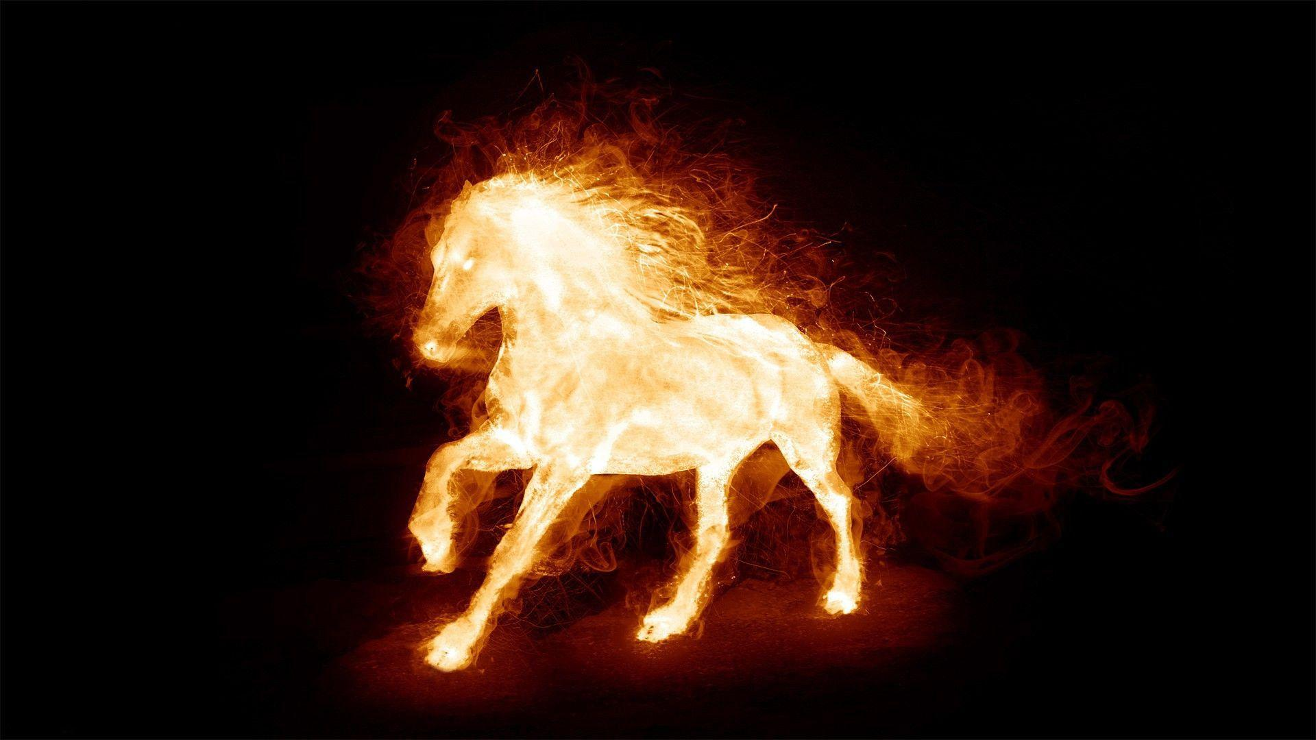 Burning Horse Wallpaper Fire Hd 12811 Wallpapers