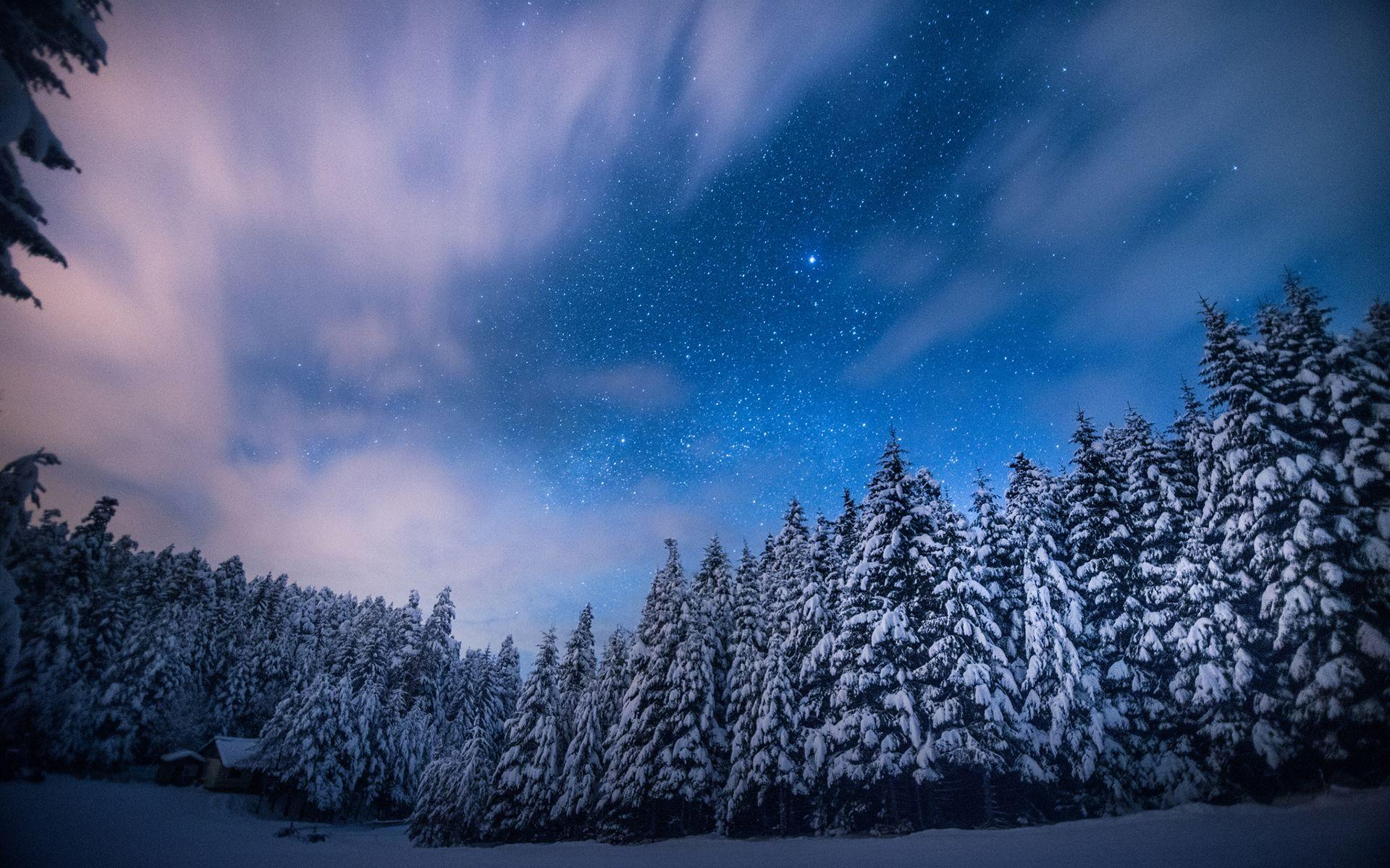 Winter Forest Wallpapers Night Wallpaper Cave
