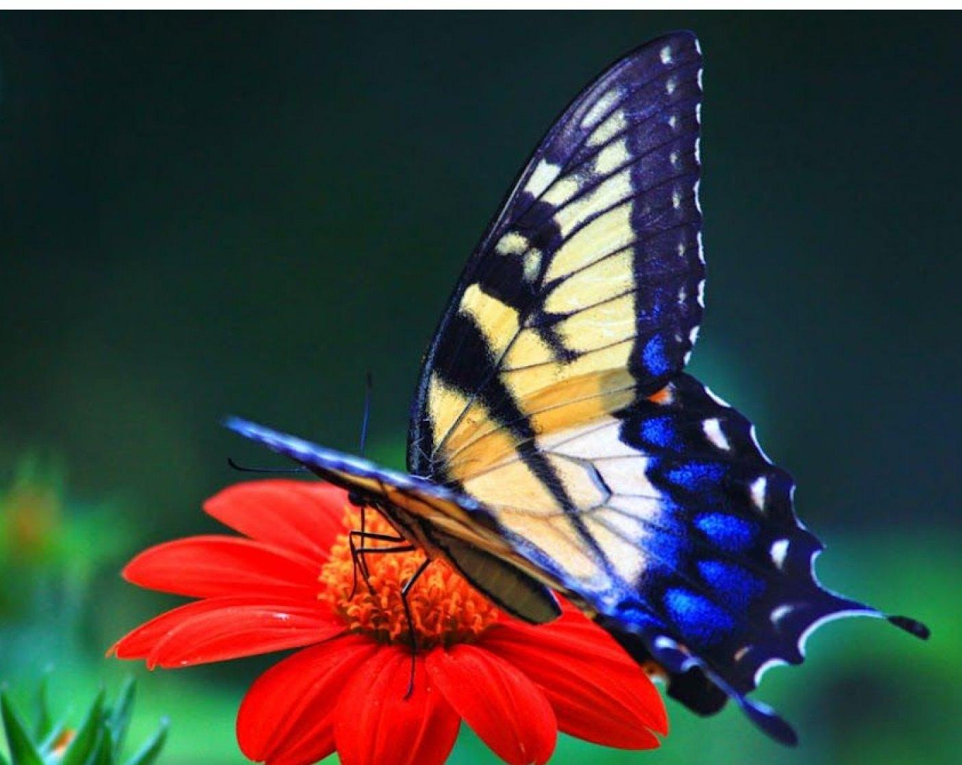 Beautiful Butterfly HD Wallpapers - Wallpaper Cave