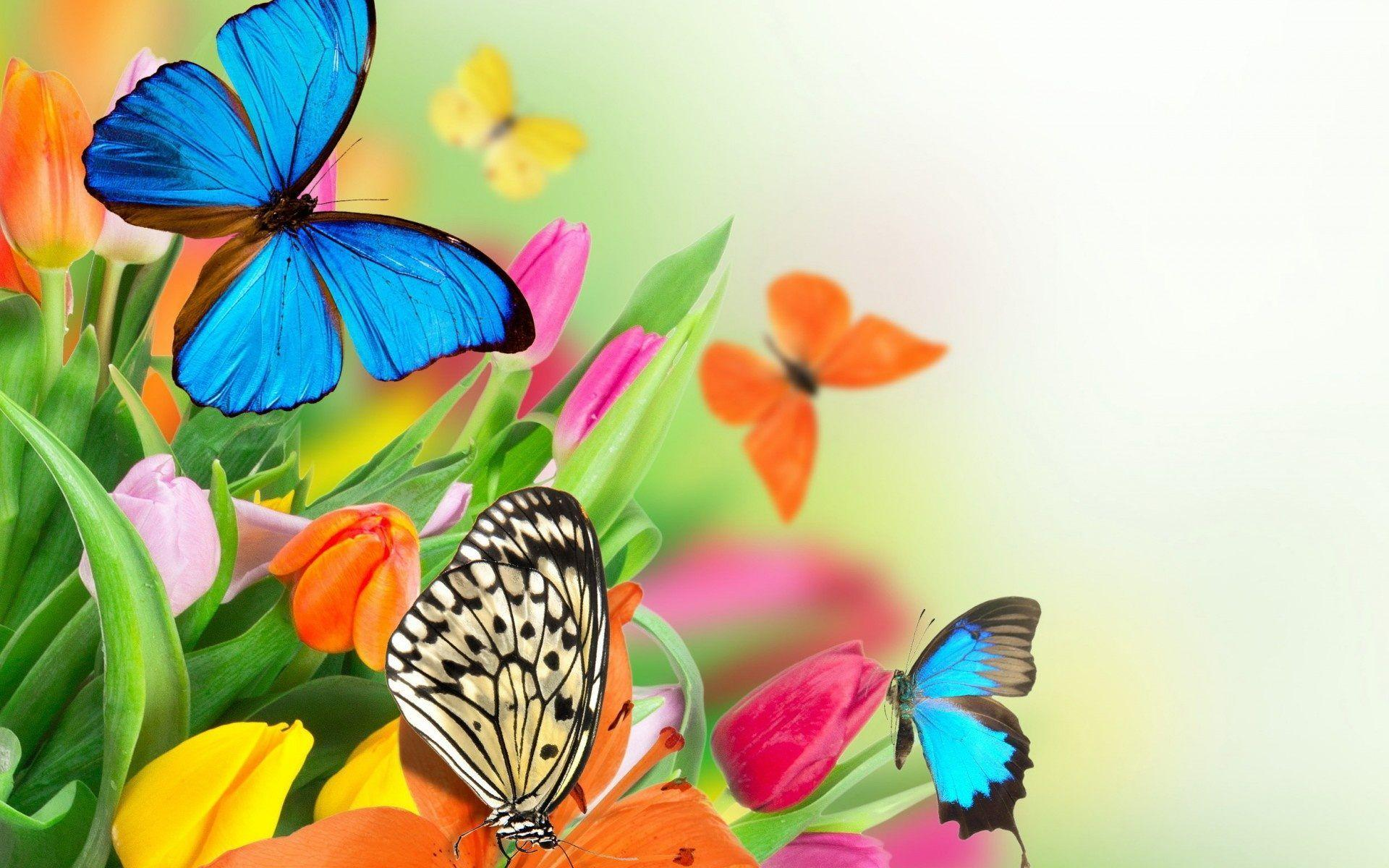 Colorful Butterfly Wallpapers - Wallpaper Cave
