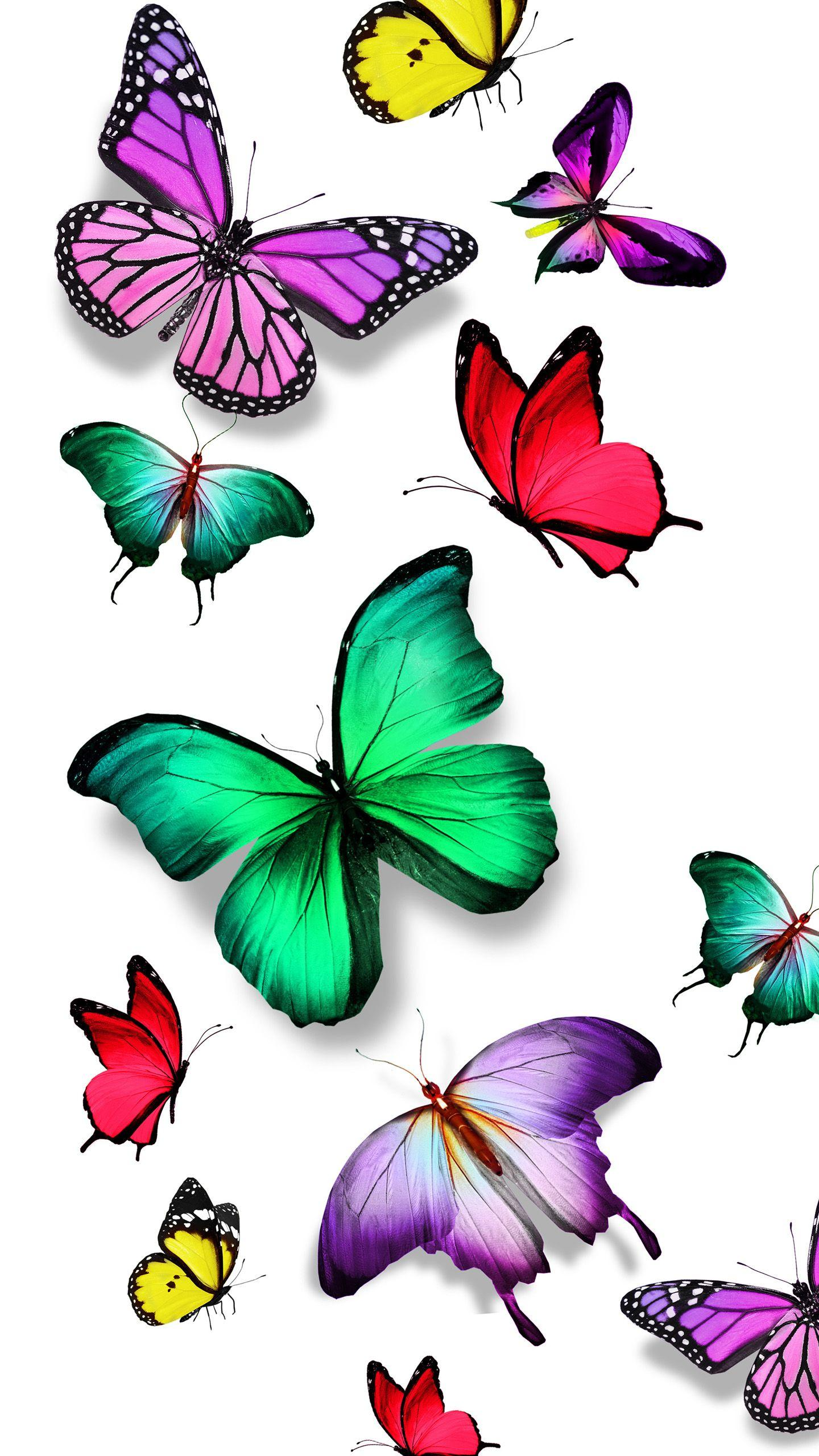 Colorful Butterfly Wallpapers Wallpaper Cave