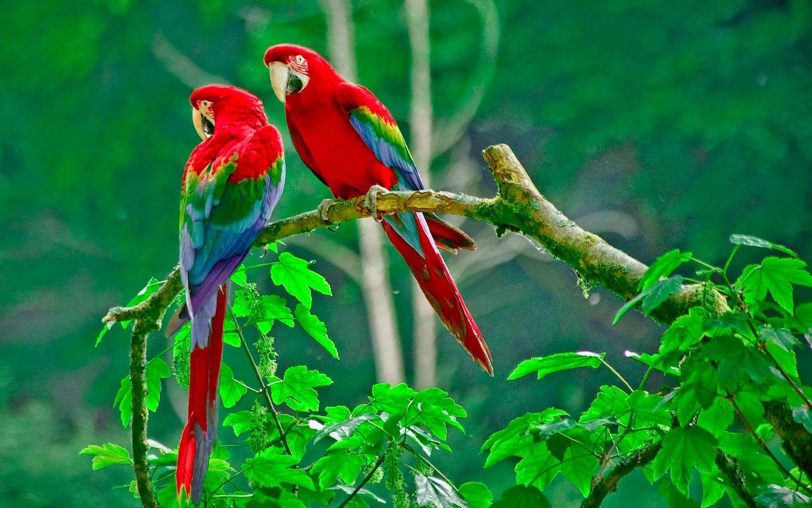 44+  Gambar Burung Full Hd HD Terbaik Gratis