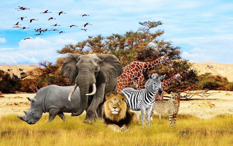 african animals animal safari wallpapers tiere iphone elephants tierkinder tierbabys wallpapercave