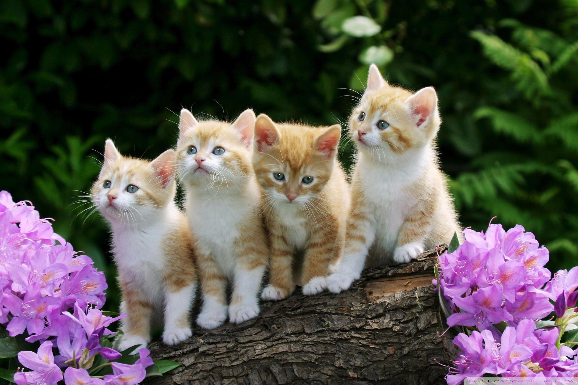 35 Trends For Cute Cat Images For Whatsapp Dp Lee Dii