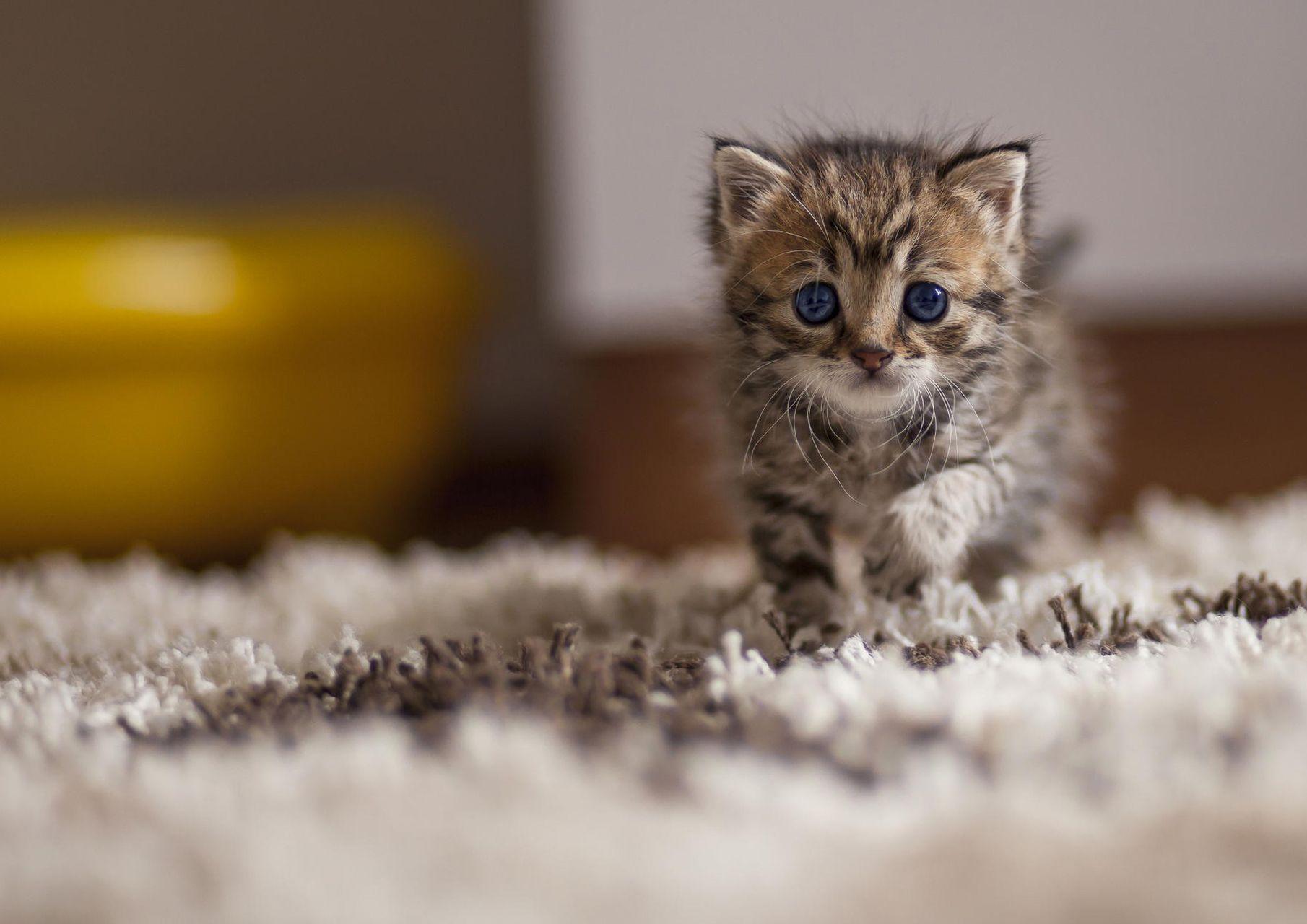 Cute Cat Wallpaper Of Cats