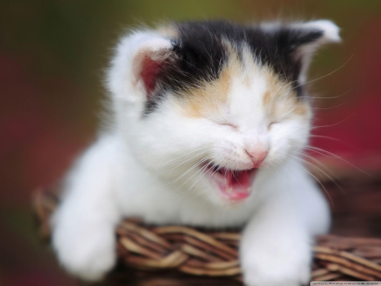 Cute Cat Wallpapers As Dp Wallpaper Cave