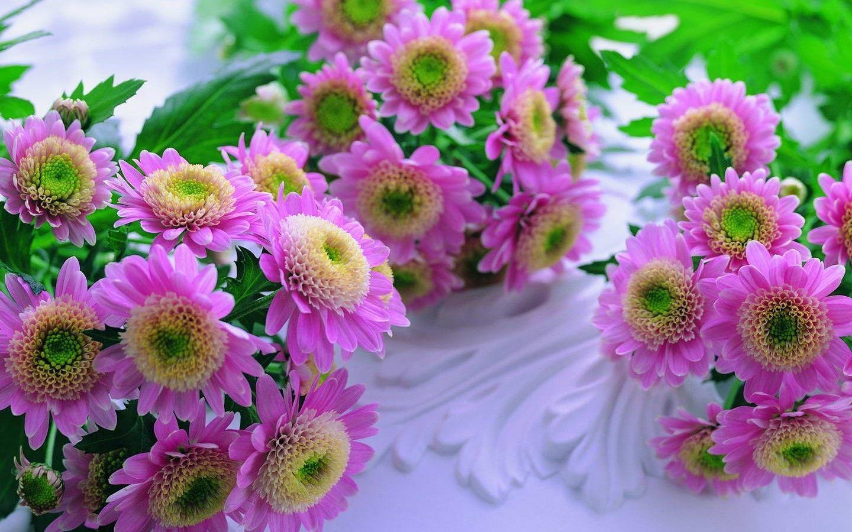 Beautiful Flowers Wallpapers Hd Wallpaper Cave