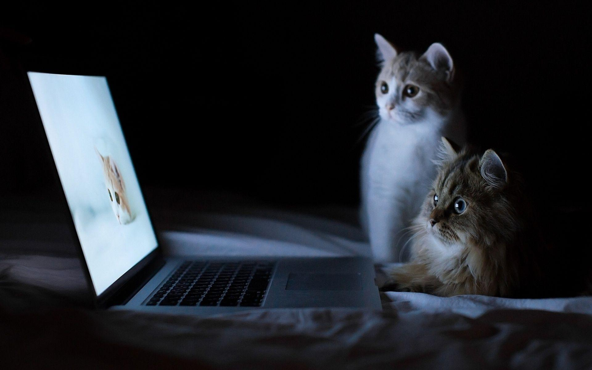 Full Hd Wallpapers Of Cute Cats For Dell Laptop Wallpaper Cave