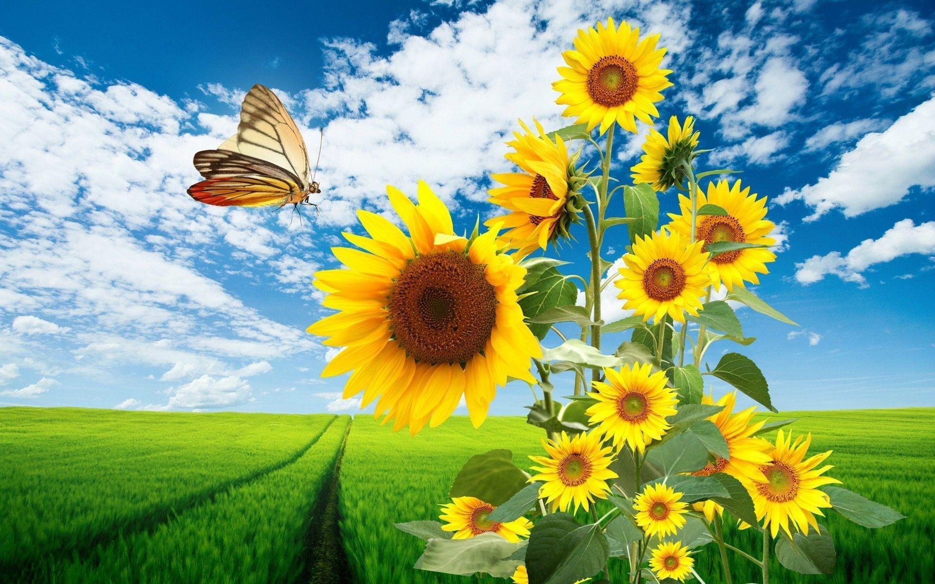 3d Sunflower Wallpapers For Desktop - Wallpaper Cave