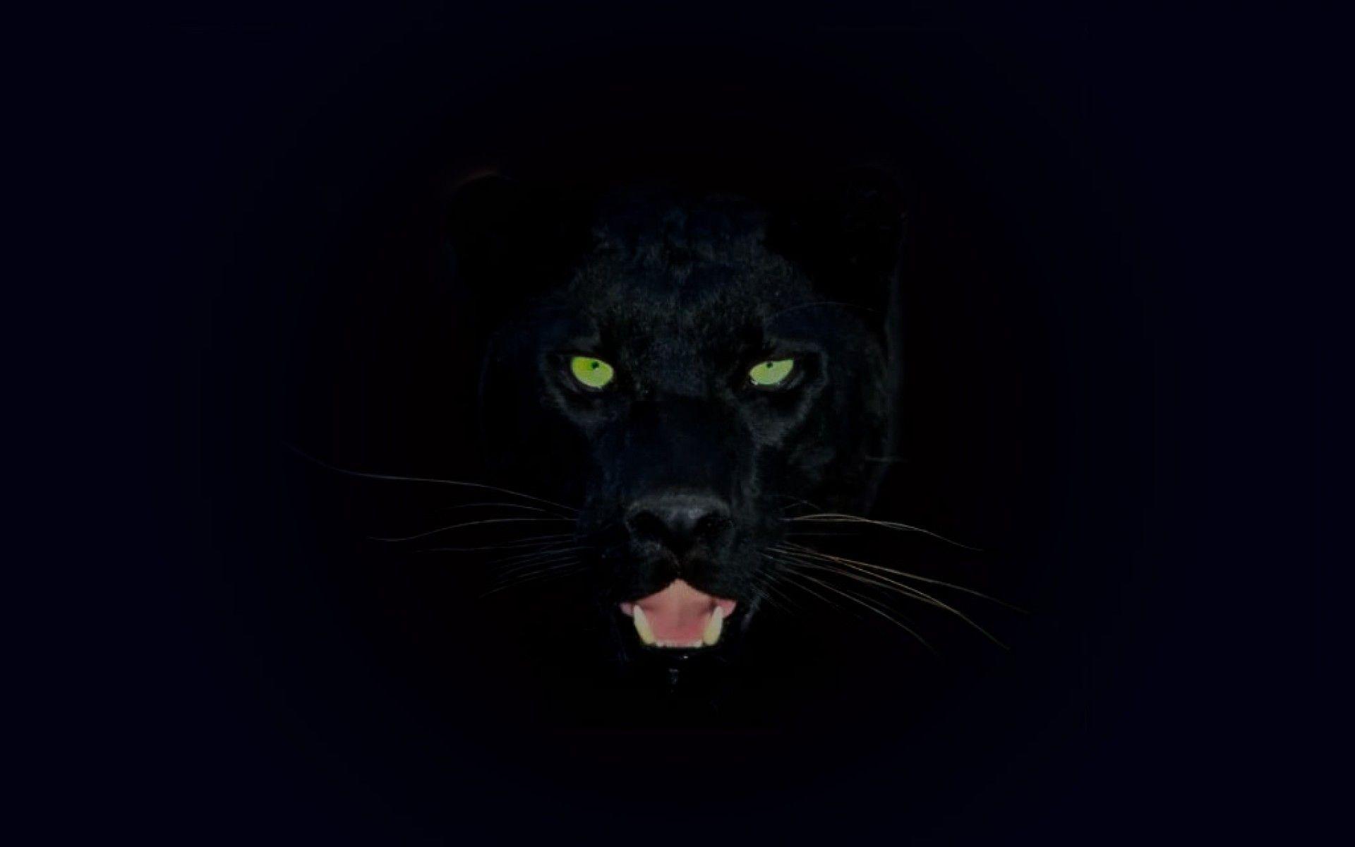 Black Jaguar HD Mobile Wallpapers