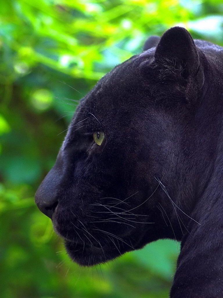 Black Jaguar HD Mobile Wallpapers - Wallpaper Cave