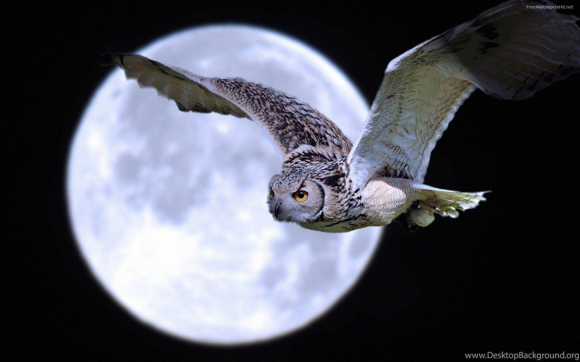 Unduh 6800 Wallpaper Animasi Burung Gambar Paling Keren