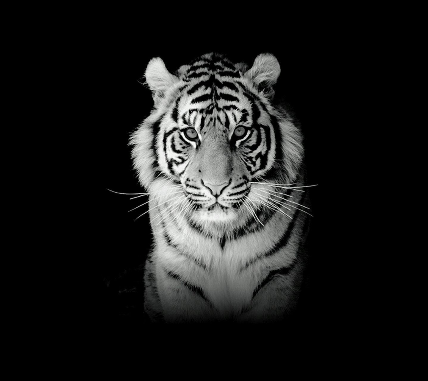 84 Gambar Wallpaper Harimau Putih Paling Bagus
