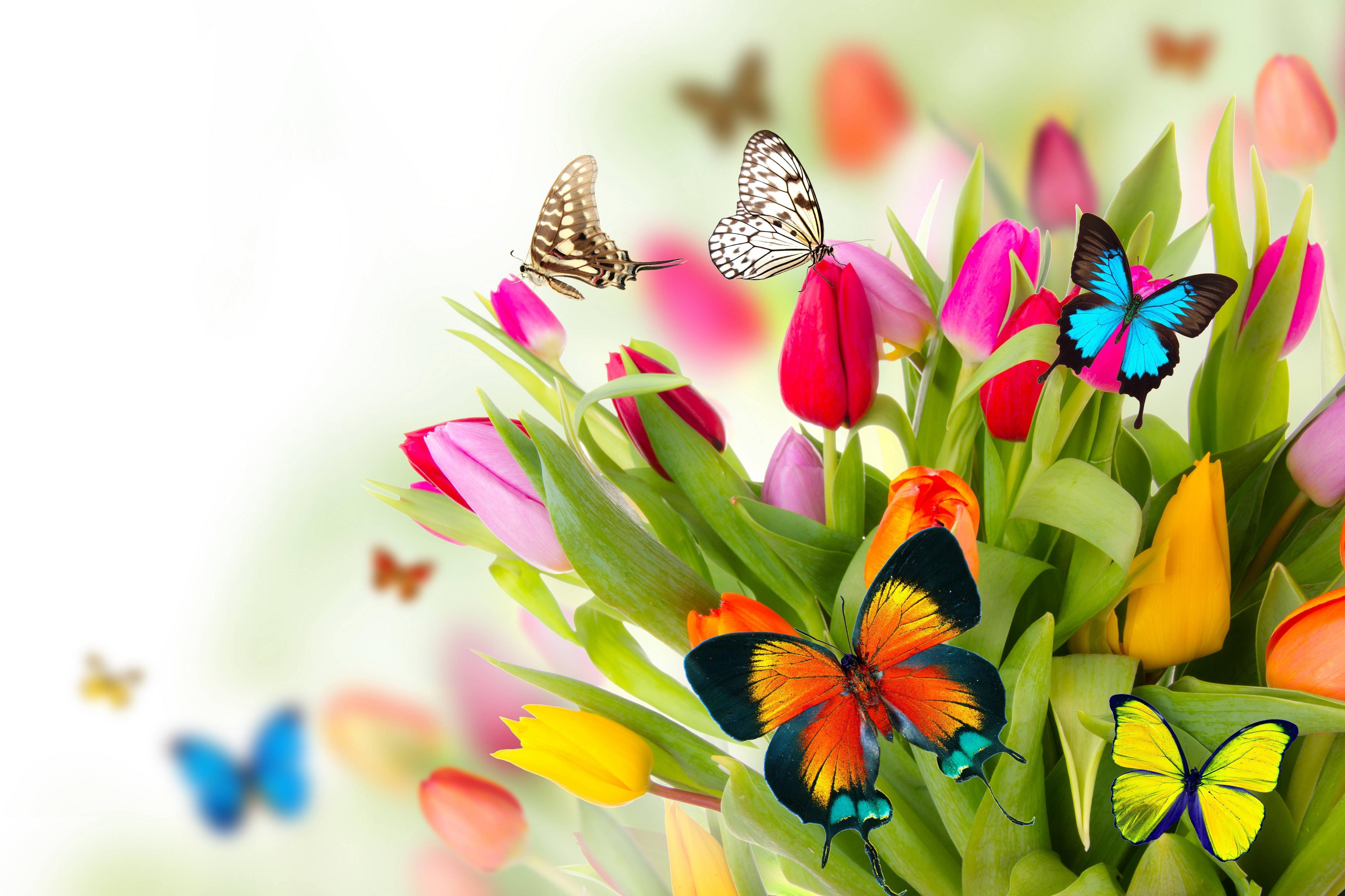 Best Wallpaper Desktop Background Flowers Full Hd Pics Backgrounds