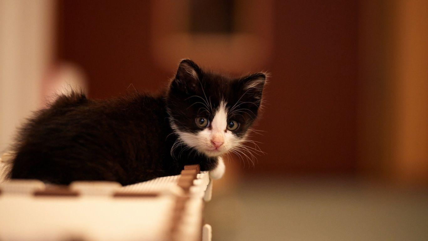 Cute Black And White Kittens Wallpapers Wallpaper Cave