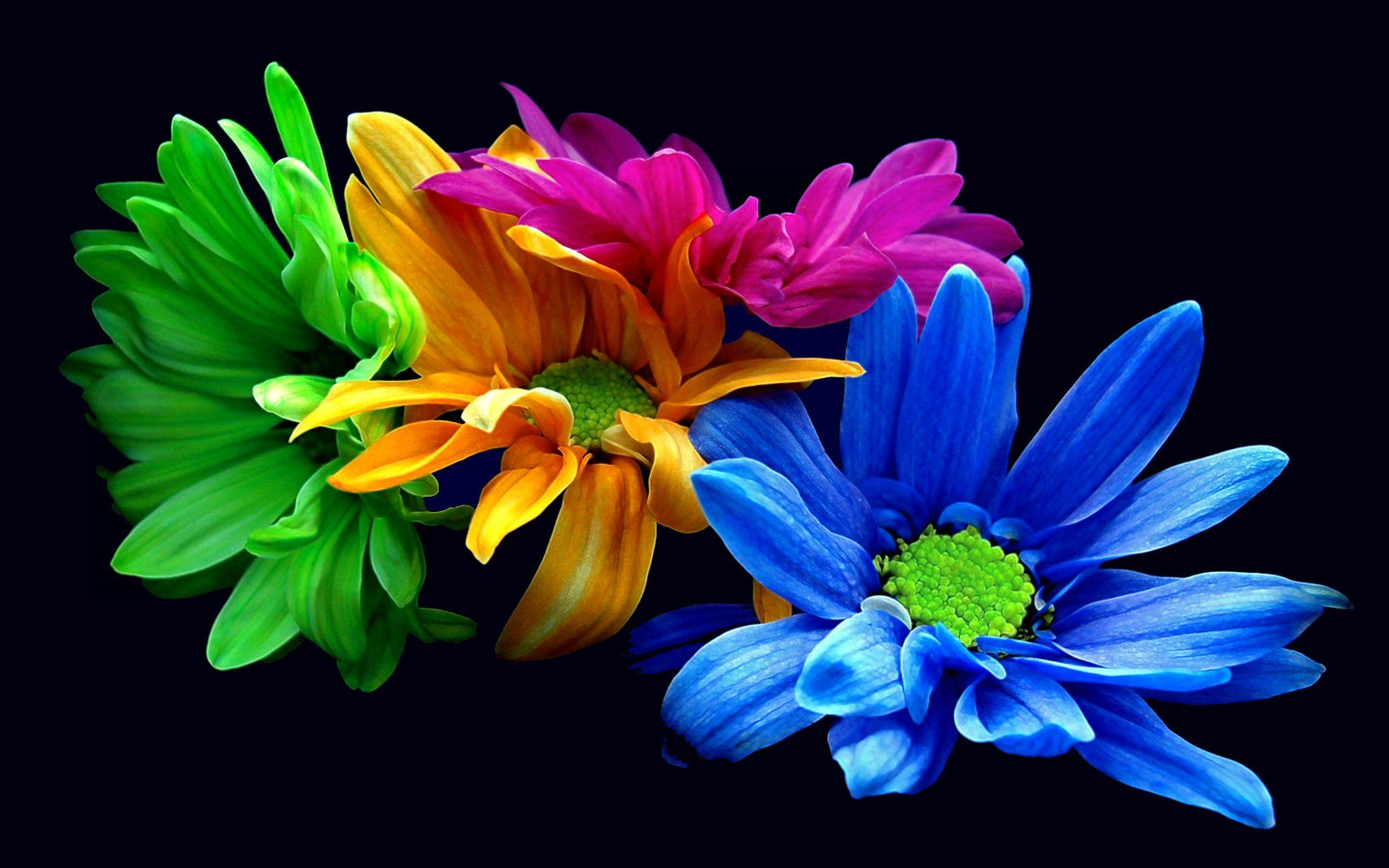 Colorful Flower HD Wallpapers - Wallpaper Cave