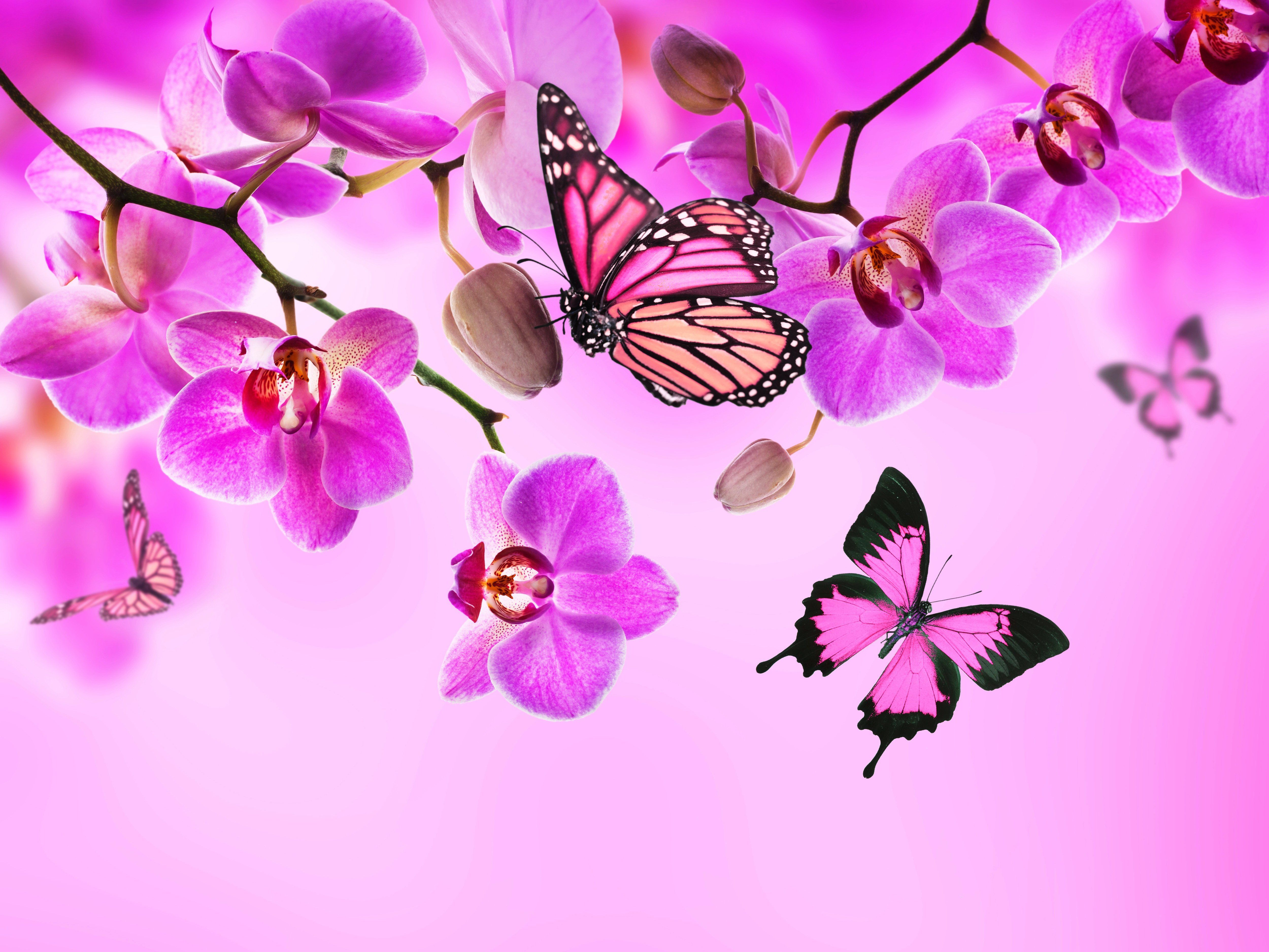 Crystal Pink Butterfly Wallpapers