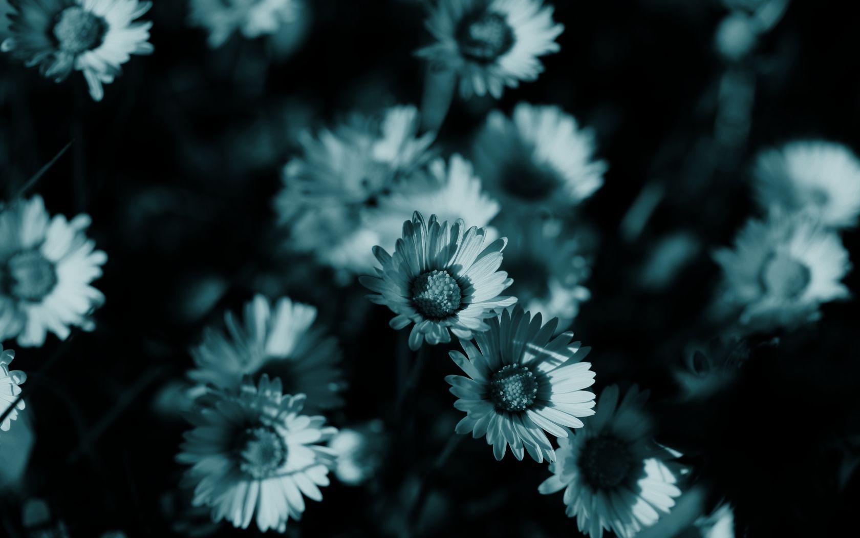 Wallpapers Dark Flower - Wallpaper Cave