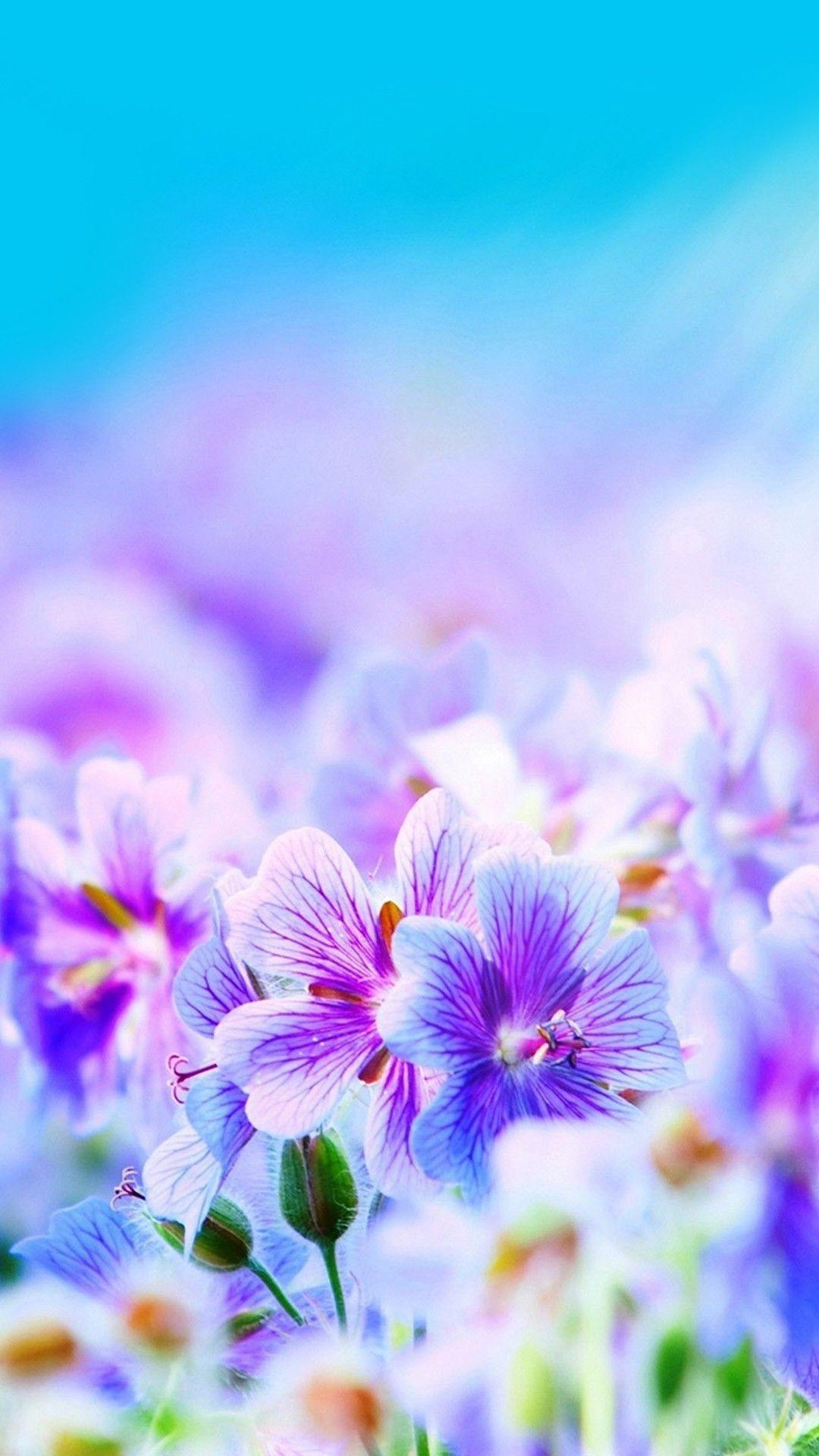 Q Mobile A 34 Flowers Wallpapers Wallpaper Cave