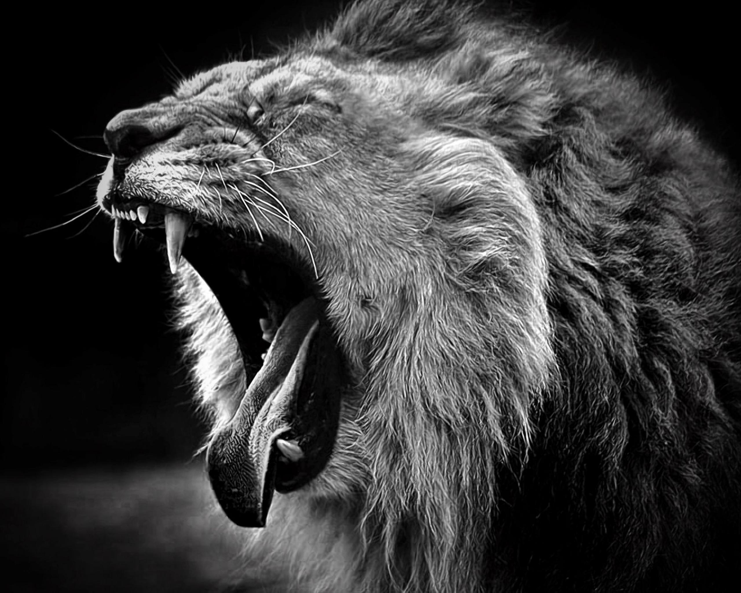 Lion Wallpapers Black And White Wallpaper Cave