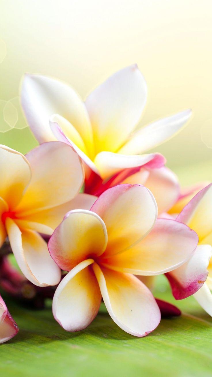Tropical Floral Wallpaper Flower