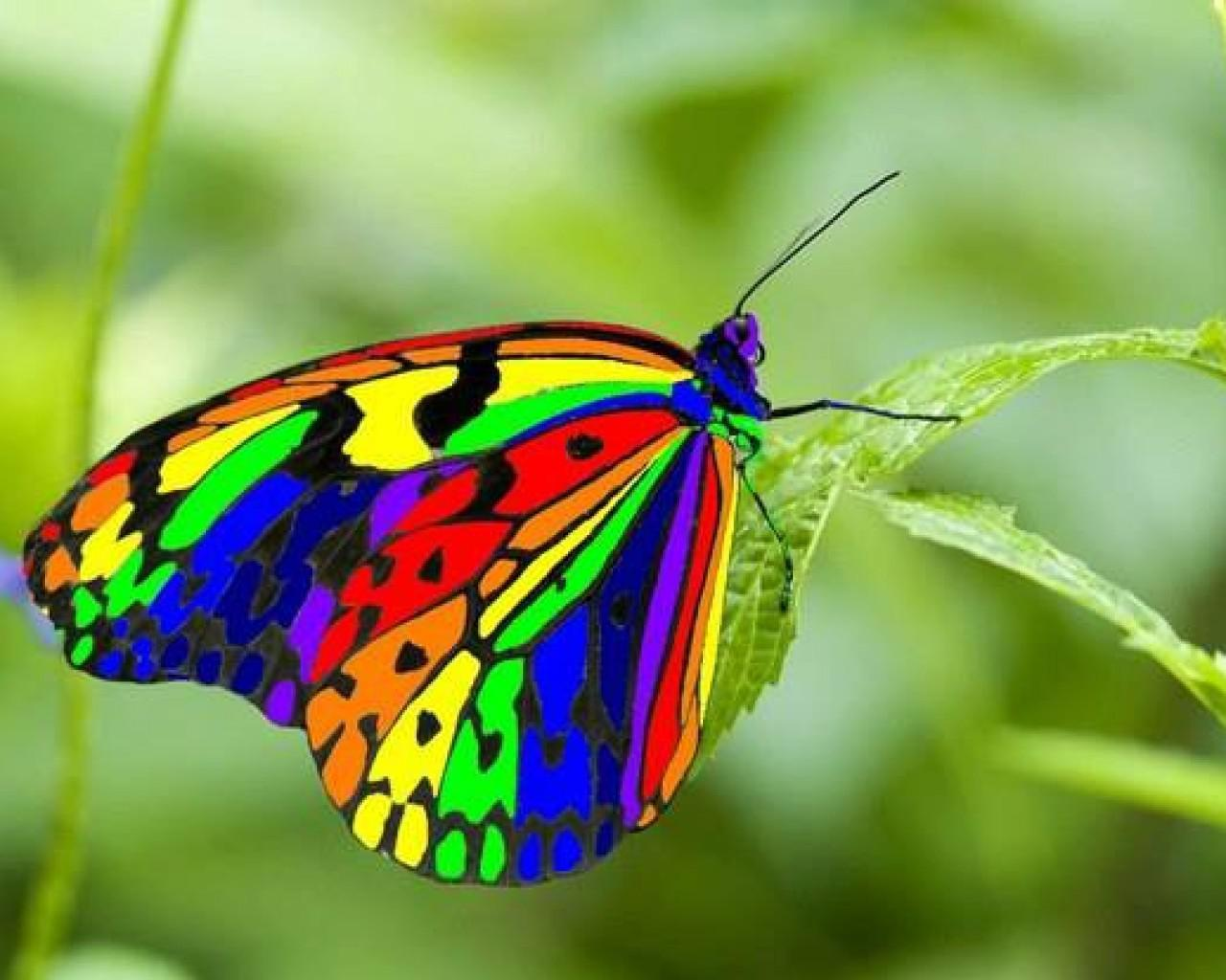 Colourfull Butterfly Mobile Wallpapers Wallpaper Cave
