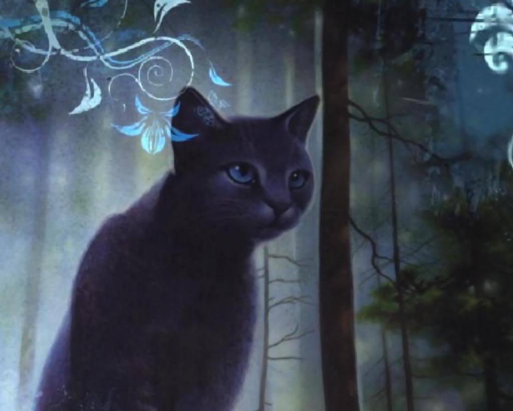 Image Result For Warrior Cats Wallpaper Desktop
