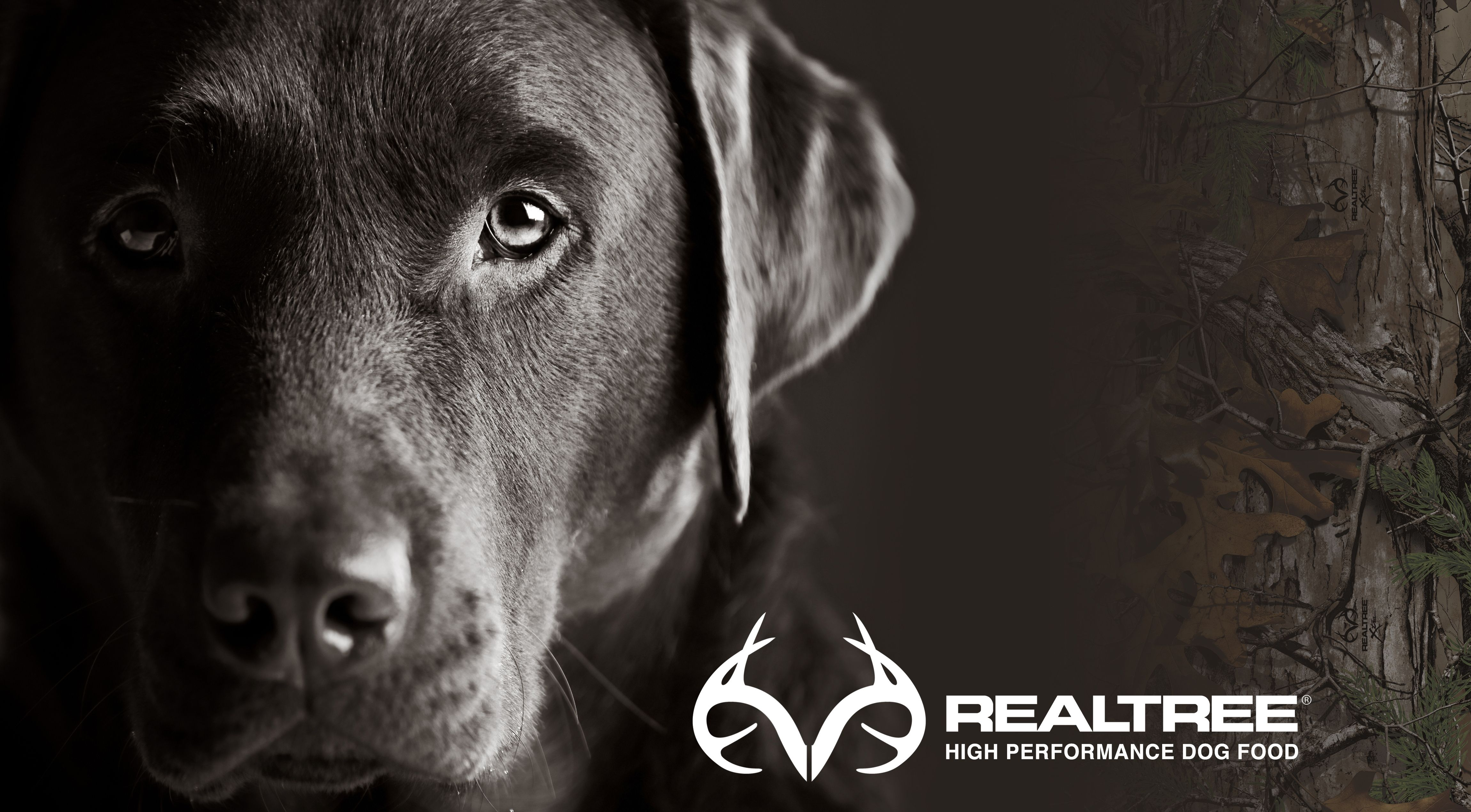Realtree Wallpapers, 42++ Realtree Wallpapers and Photos In Full HD .