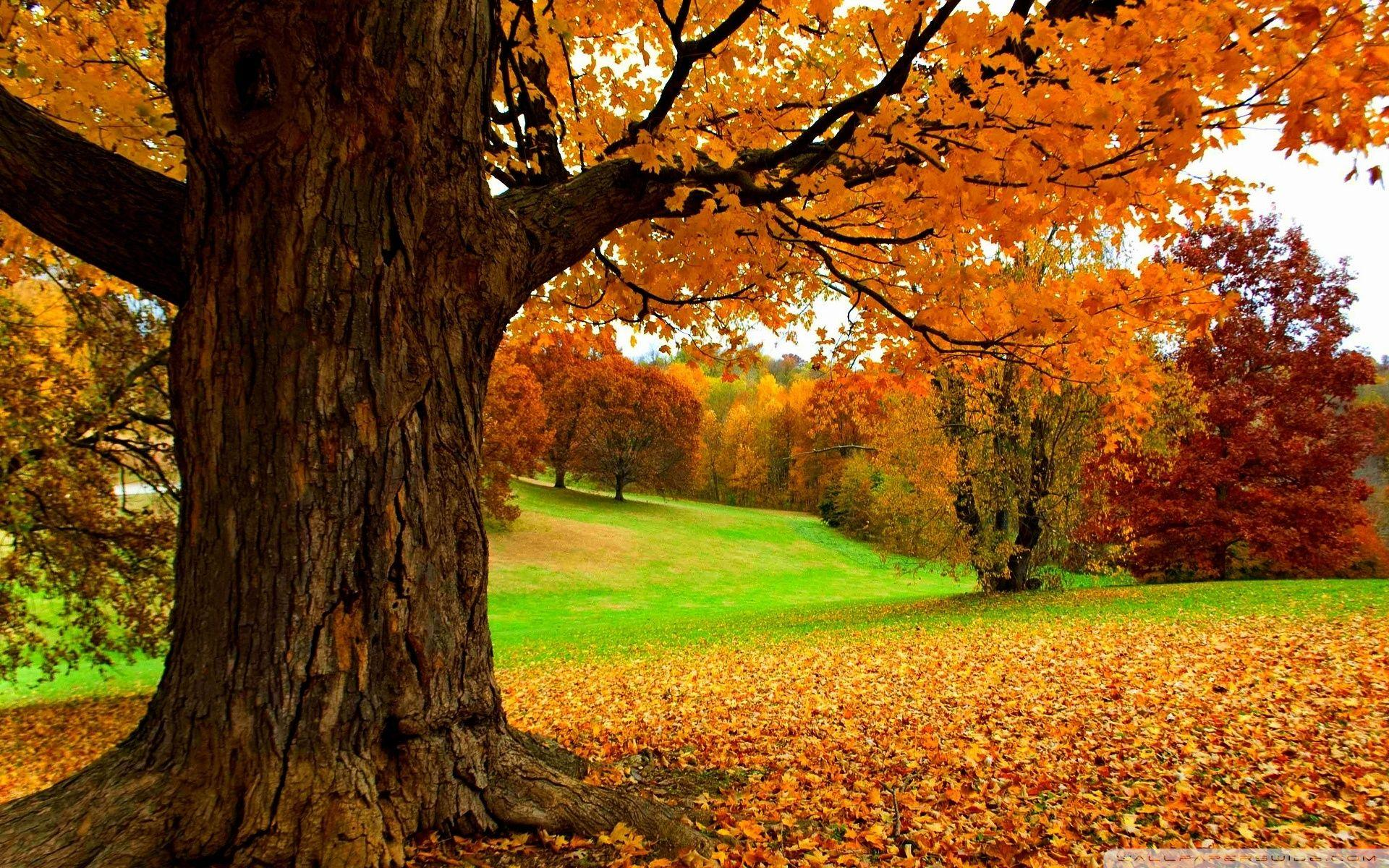 Yellow Tree Hd Wallpapers Wallpaper Cave