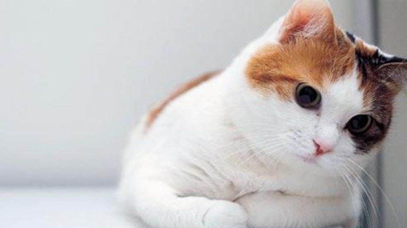 Cute Cat Wallpapers For Computer Desktop Wallpaper Cave