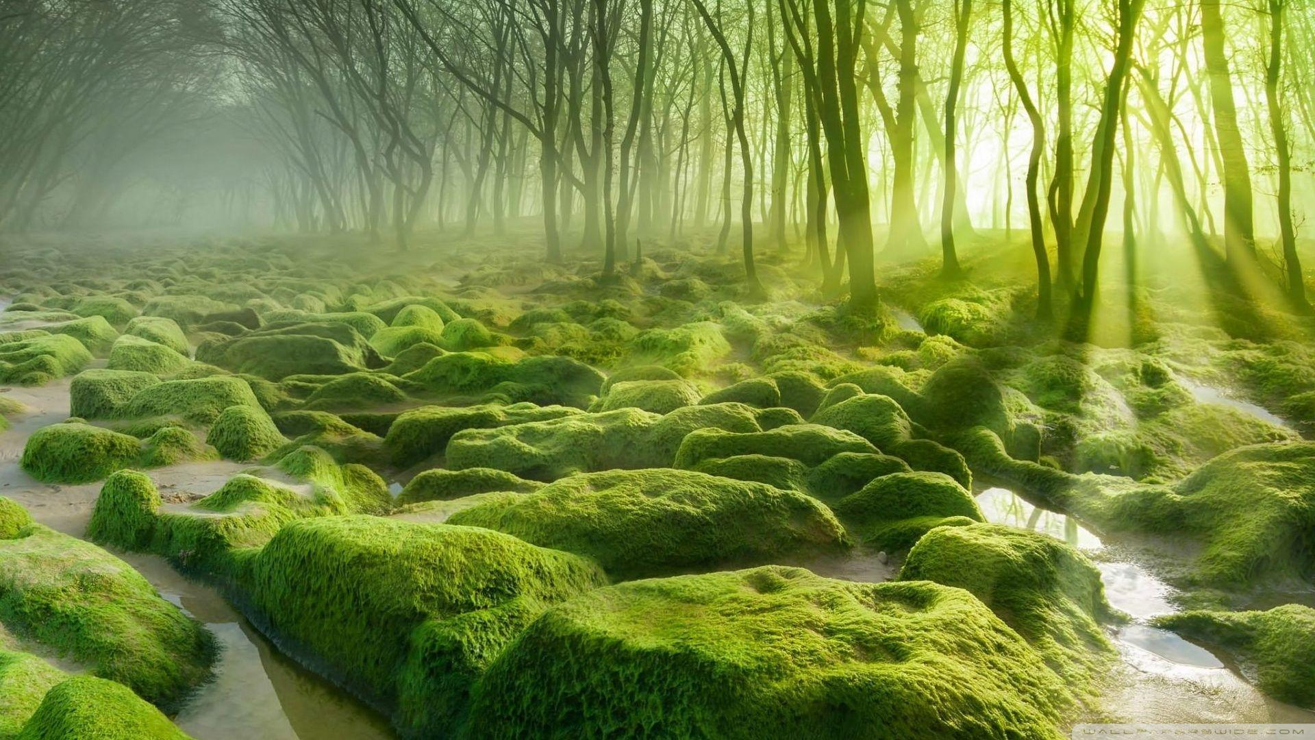 HD Green Forest Wallpapers