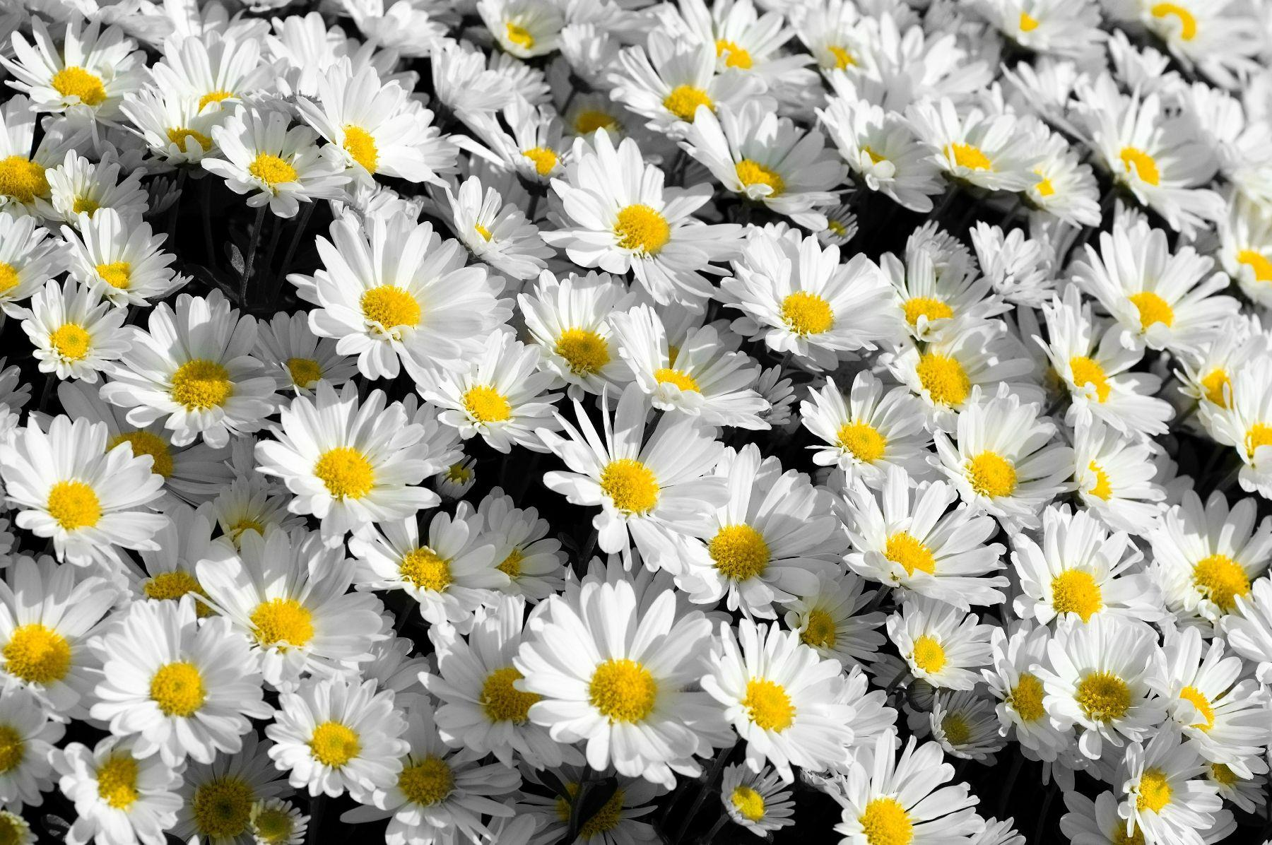 White Floral Tumblr Backgrounds Topsimages