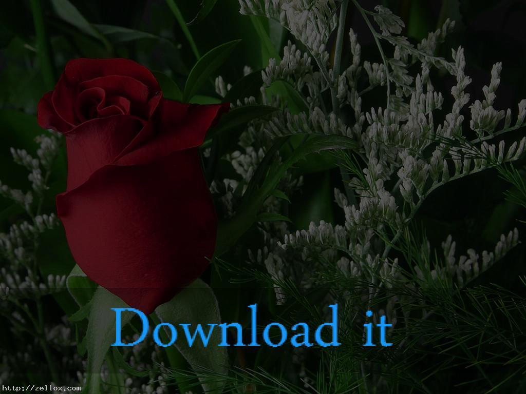 6400 Koleksi Download Gambar Bergerak Keren HD