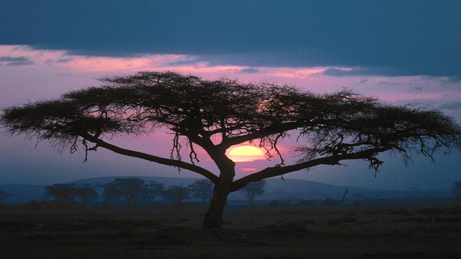Sunsets-african-tree-nature-africa-desktop-wallpapers-for-iphone-5 ...