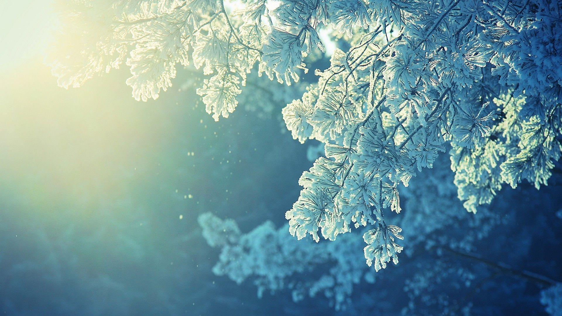 anime, Nature, Snow, Winter, Cold, Sunlight, Peaceful Wallpapers HD