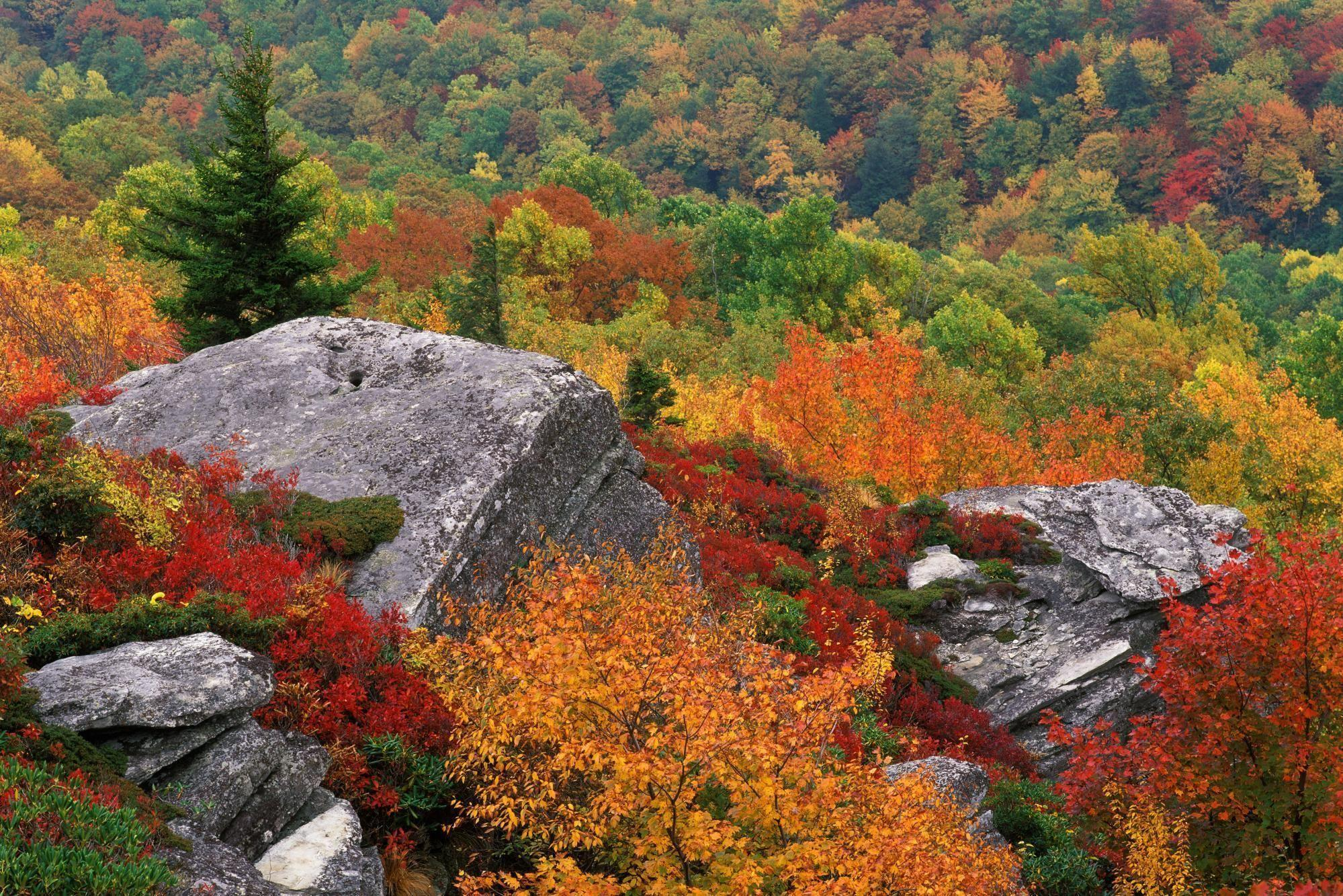 Blue Ridge Parkway North Carolina Autumn HD desktop wallpapers