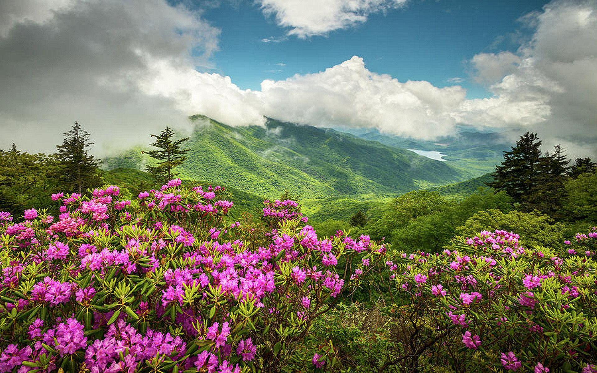 Appalachian Mountains North Carolina Blue Ridge Parkway Spring