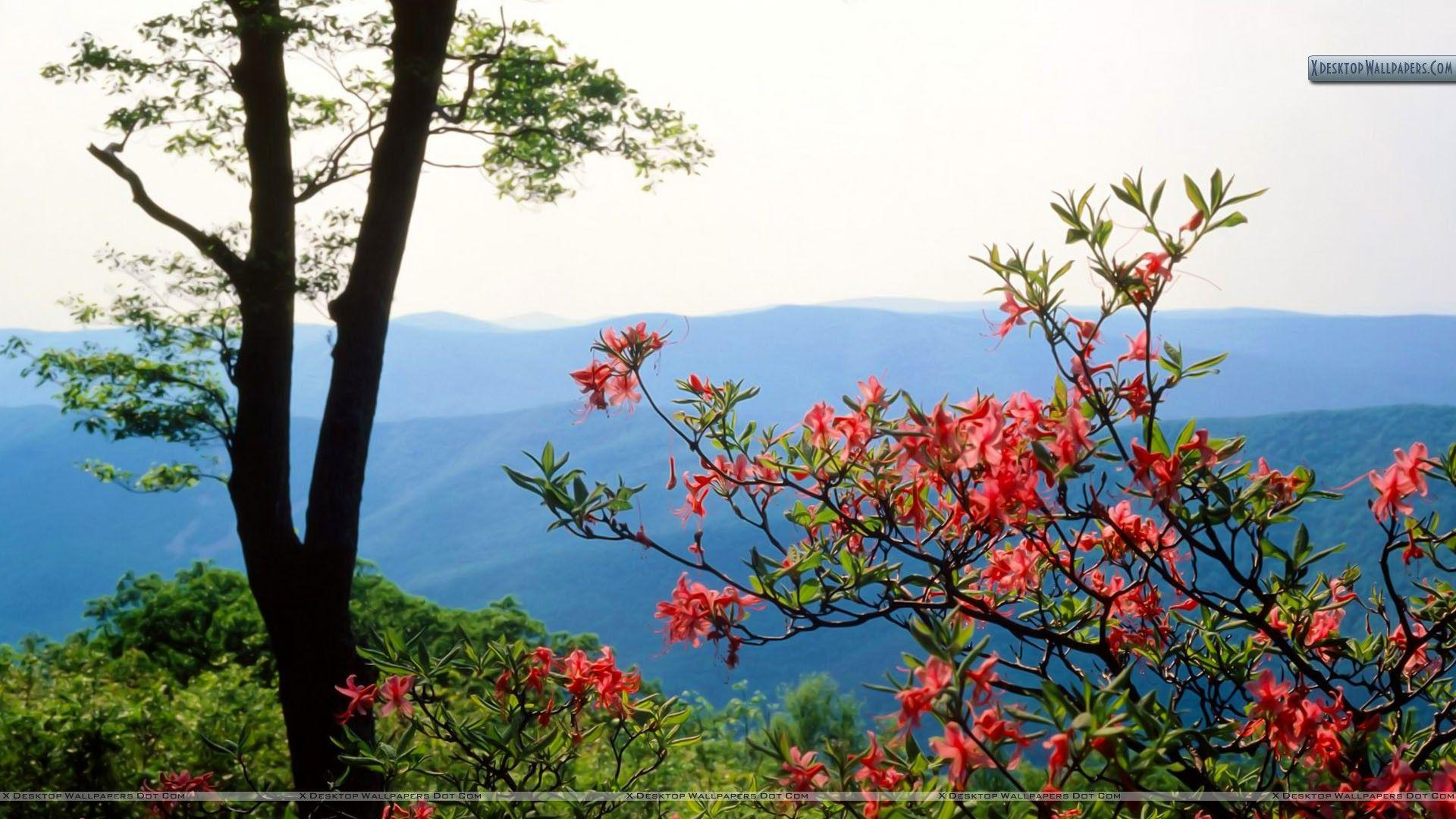 Blue Ridge Mountains North Carolina Wallpapers
