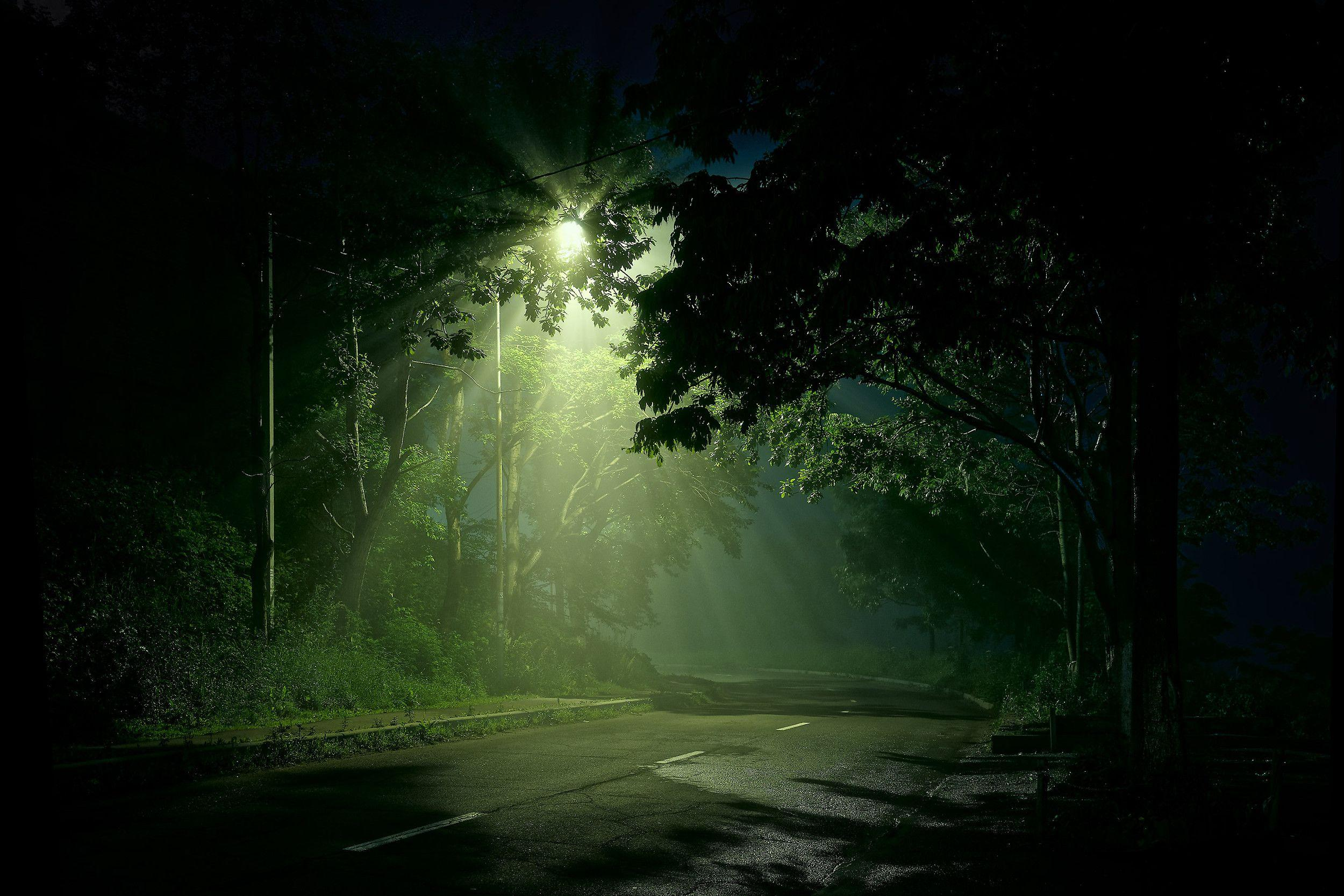 Street Light Shining on Dark Forest Road HD Wallpapers